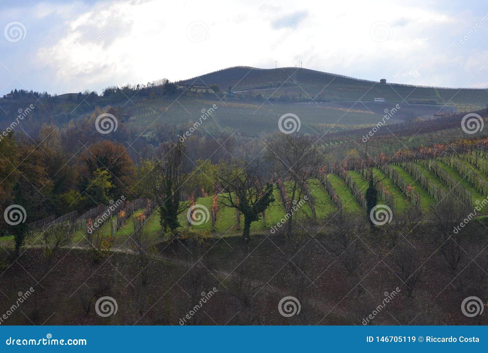 Barolo vingård, Italien