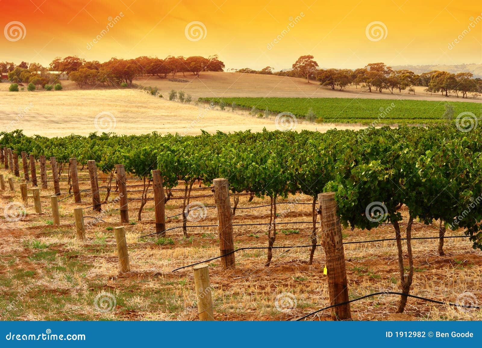 Barossa Vineyard Sunset