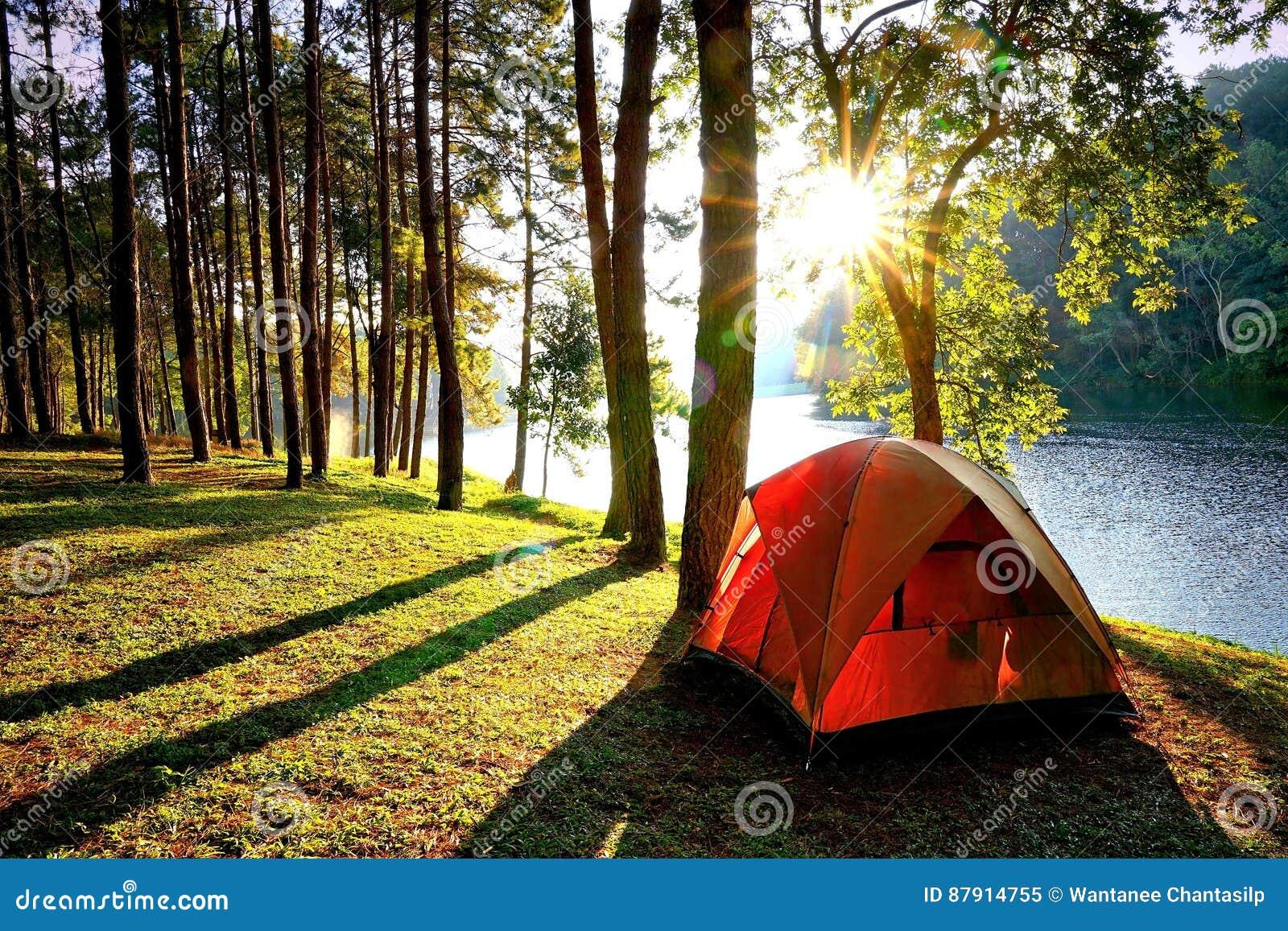 Barracas de acampamento alaranjadas na floresta do pinheiro pelo lago