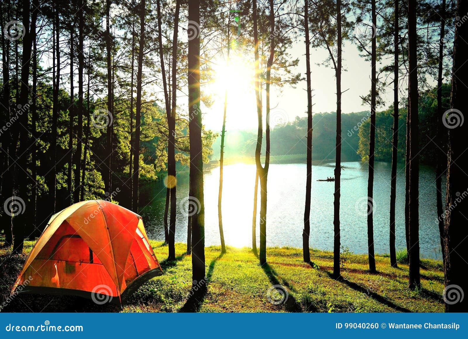 Barracas de acampamento alaranjadas na floresta do pinheiro pelo lago em Pang Oun