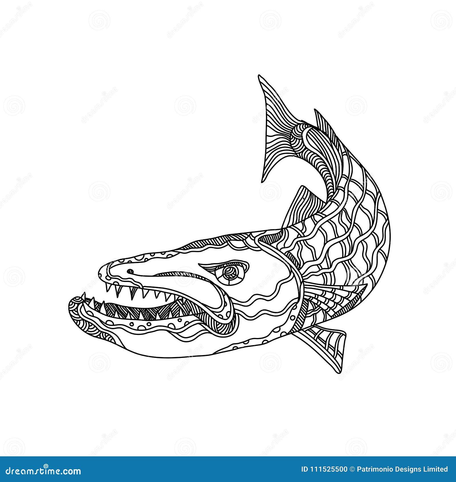 Barracuda Fish Doodle Art stock illustration  Illustration of