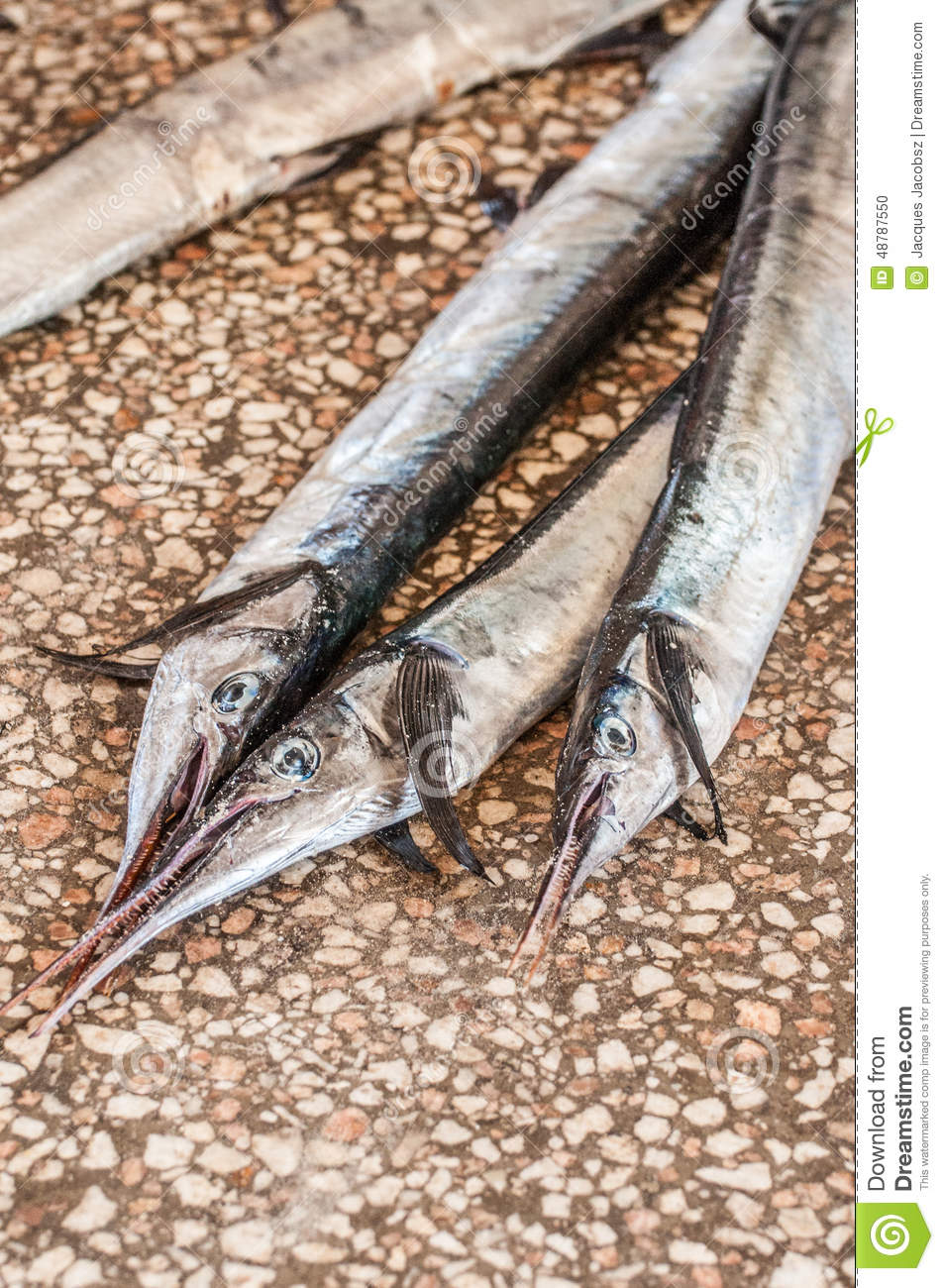 Barracuda stock photo image 48787550 for Barracuda fish for sale