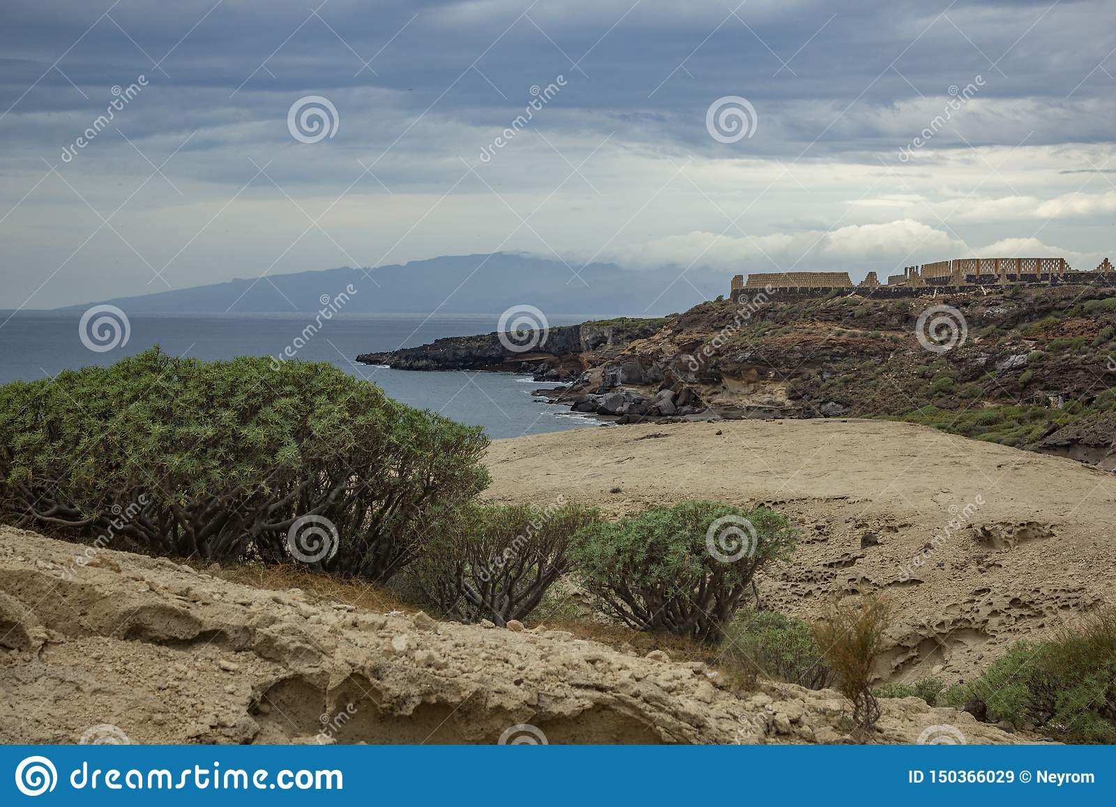 Barranco típico que rodea por el balsamifera endémico canario en Adeje, el sur del euforbio del milkweed de Tenerife, islas Canar