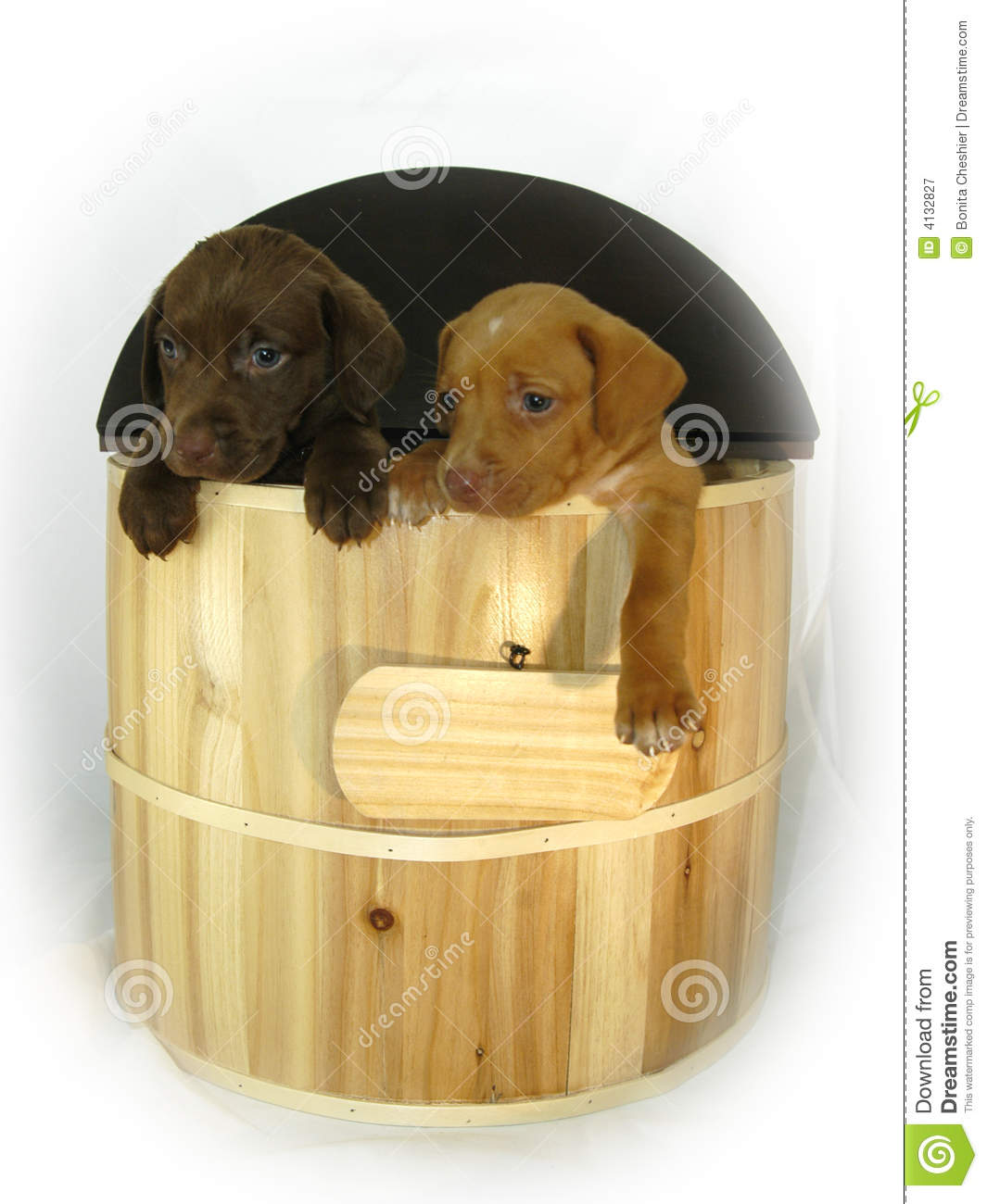 Barrel dogs doleful hang out wooden