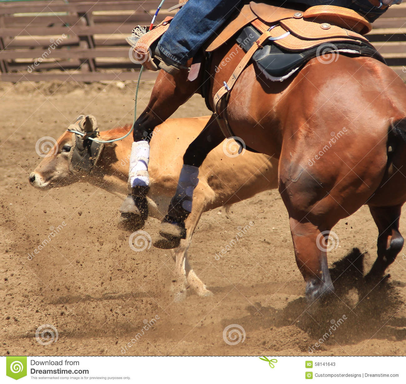 Download A Rodeo Horse Roping A Cow. Stock Image - Image of close, animal: 58141643