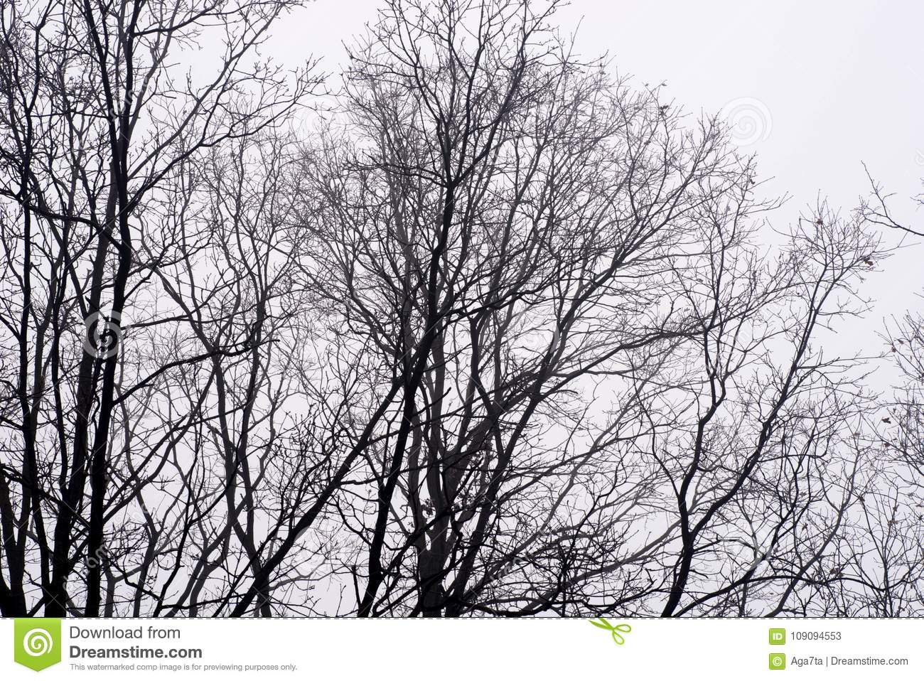 Barren tree branches against sky on foggy morning