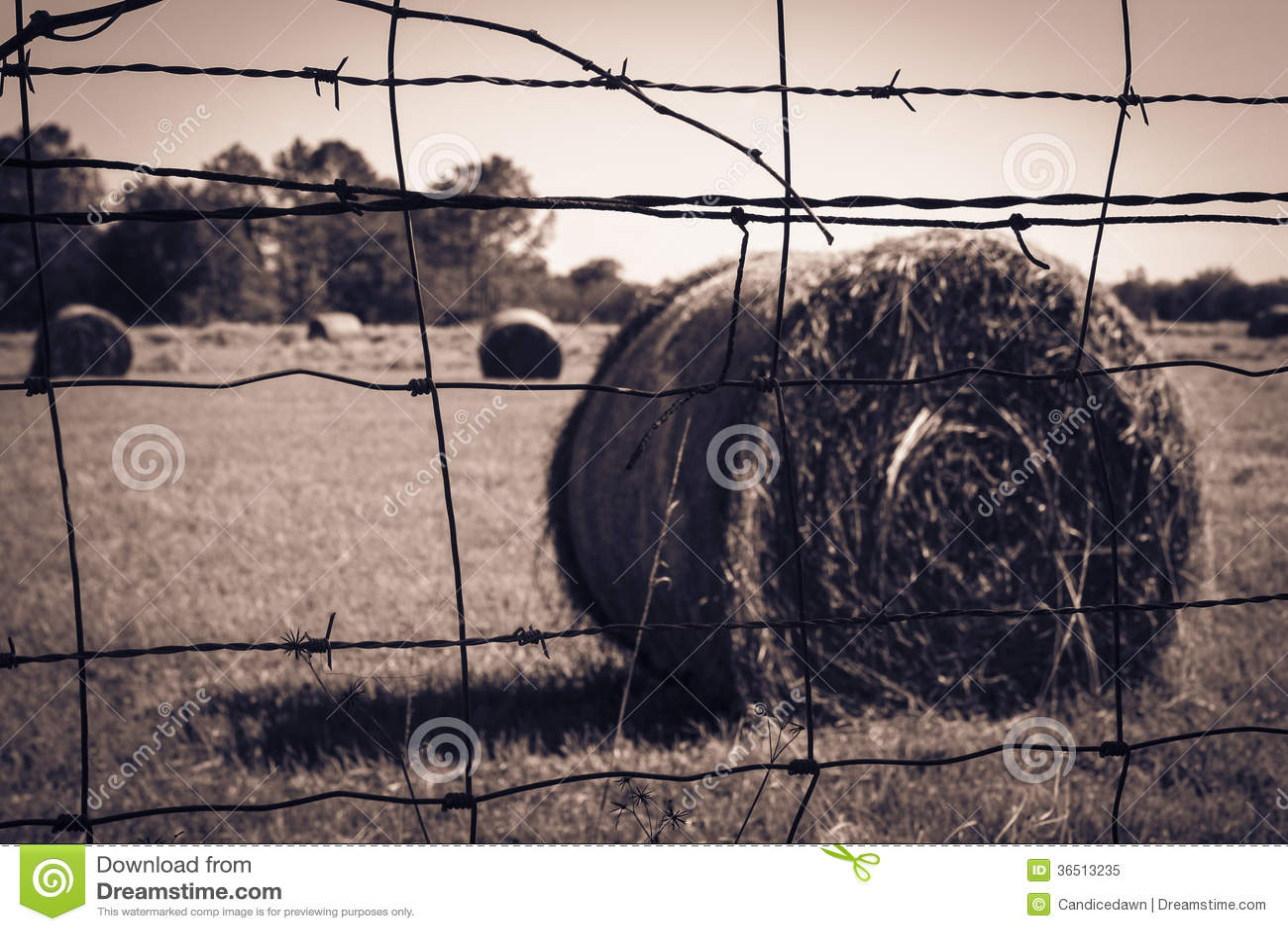 Barrière de barbelé avec Straw Bale