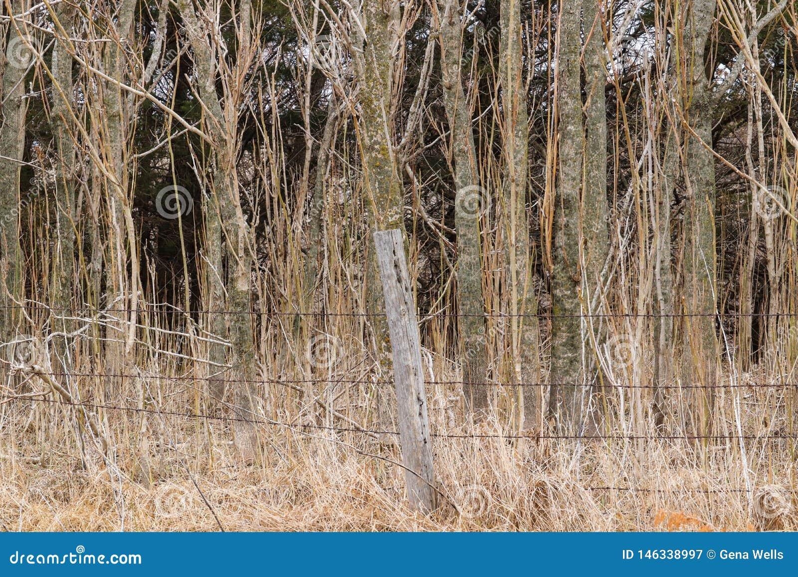 Barrière de Barewire devant la forêt
