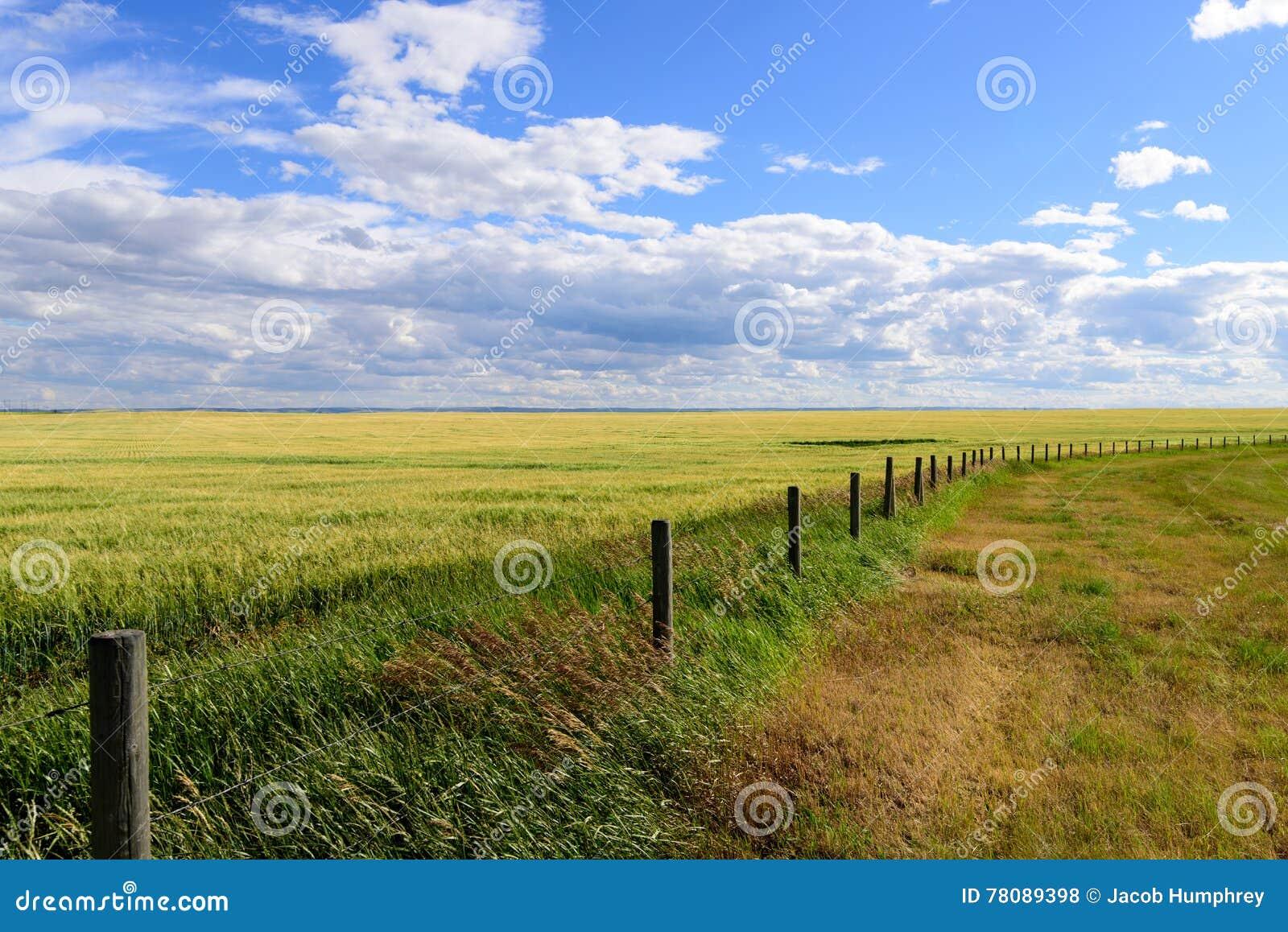 Barrière de prairie