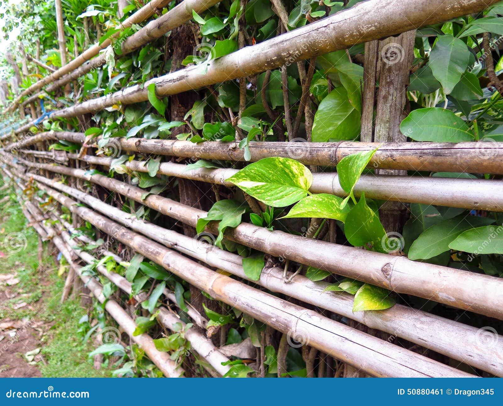 Barrière En Bambou Avec La Petite Usine Image stock - Image du ...