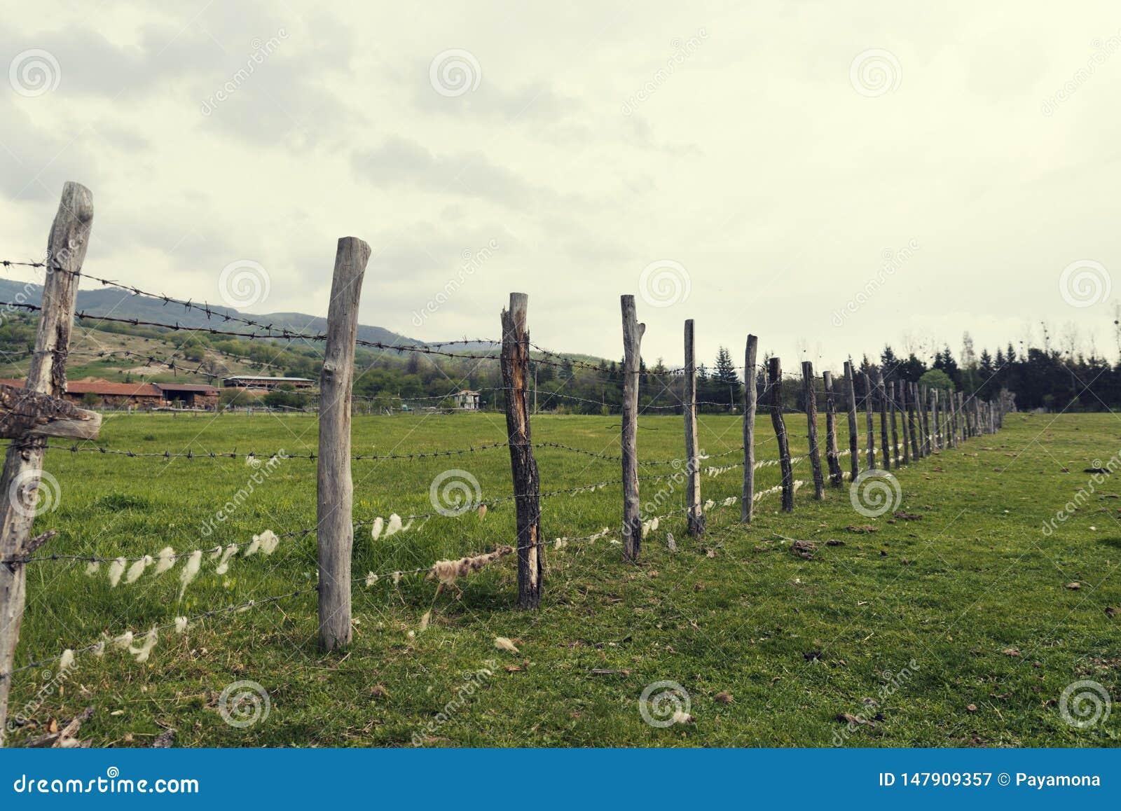 Barrière en bois avec le barbelé avec la laine de moutons là-dessus dans une ferme d animaux dans le pays