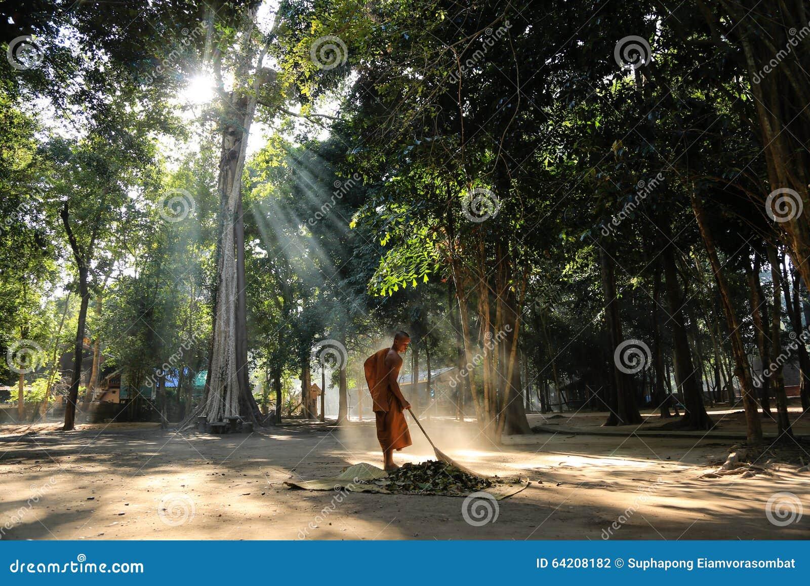 Barrido del monje la yarda del templo del bosque