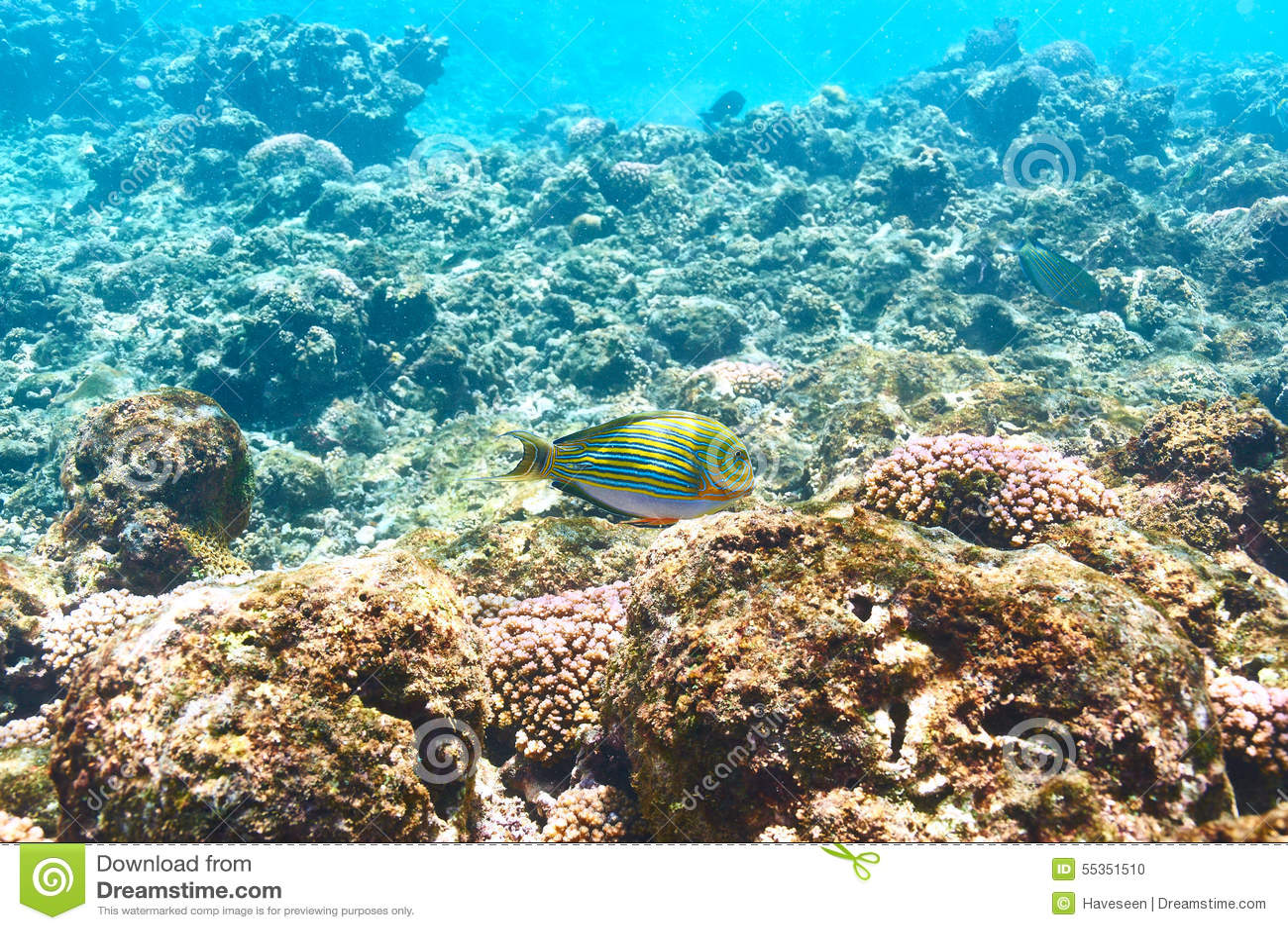 Barriera corallina e pesce