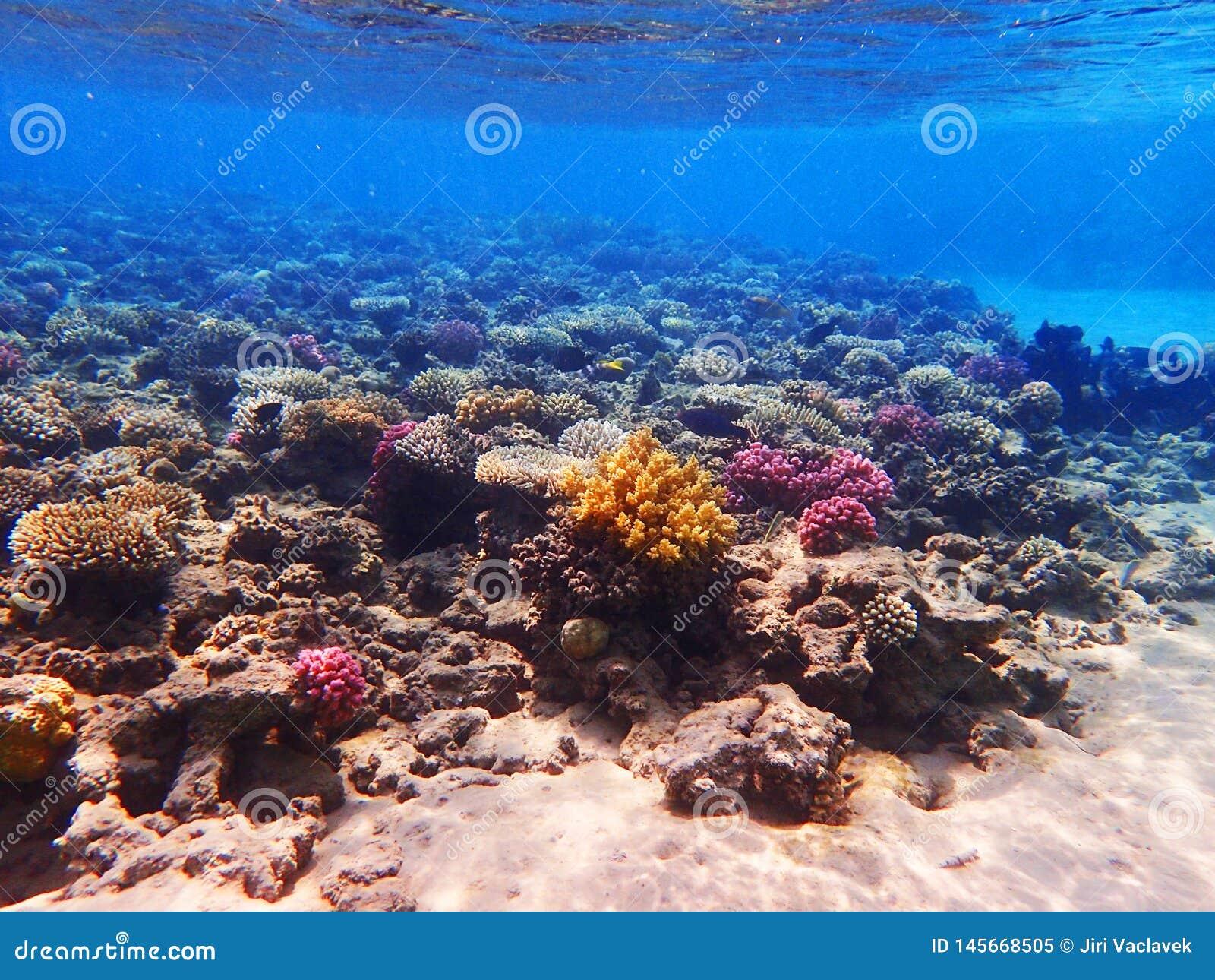 Barriera corallina nell egitto