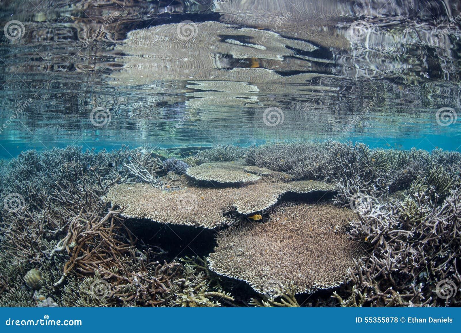 Barriera corallina poco profonda