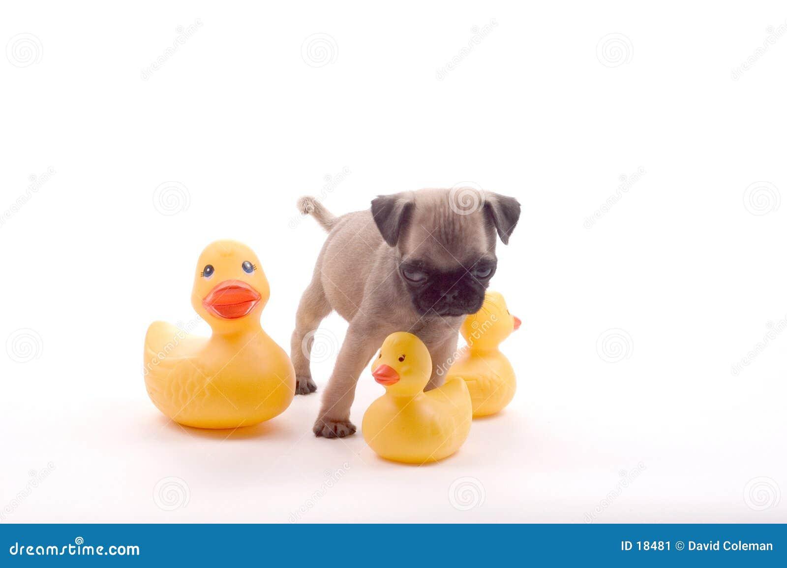 Barro amasado con los patos de goma