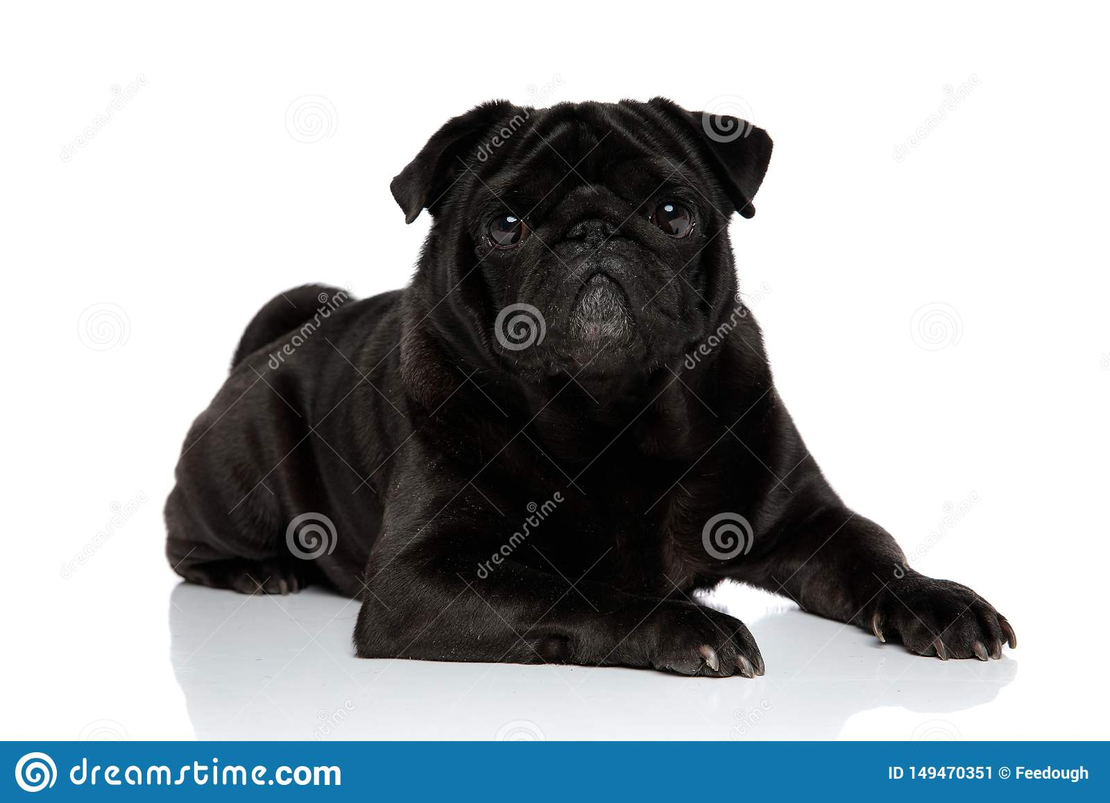 Barro amasado negro encantador que mira a la c?mara