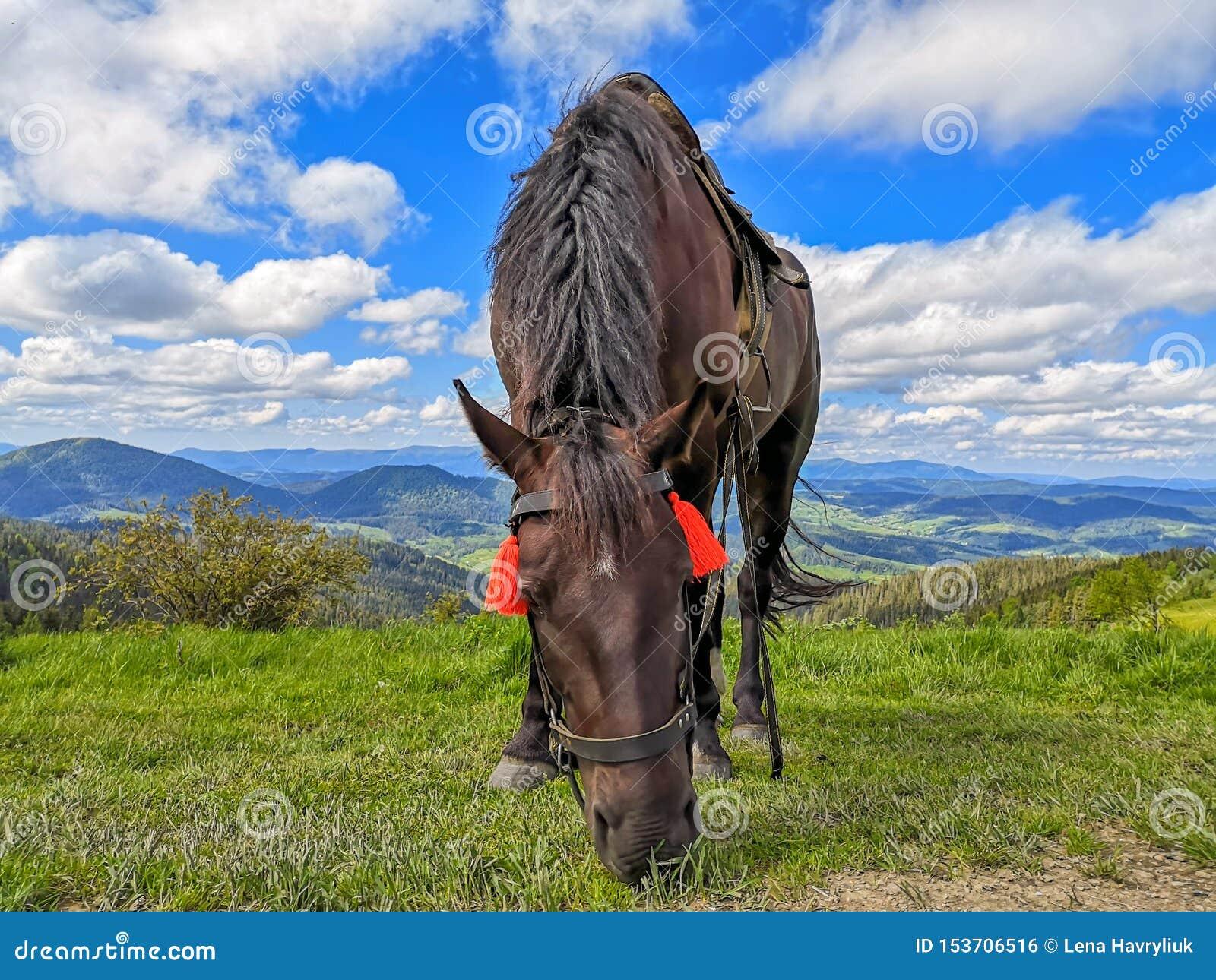 Barwiący koński pasanie w wysokich Alpejskich łąkach przeciw pięknemu krajobrazowi
