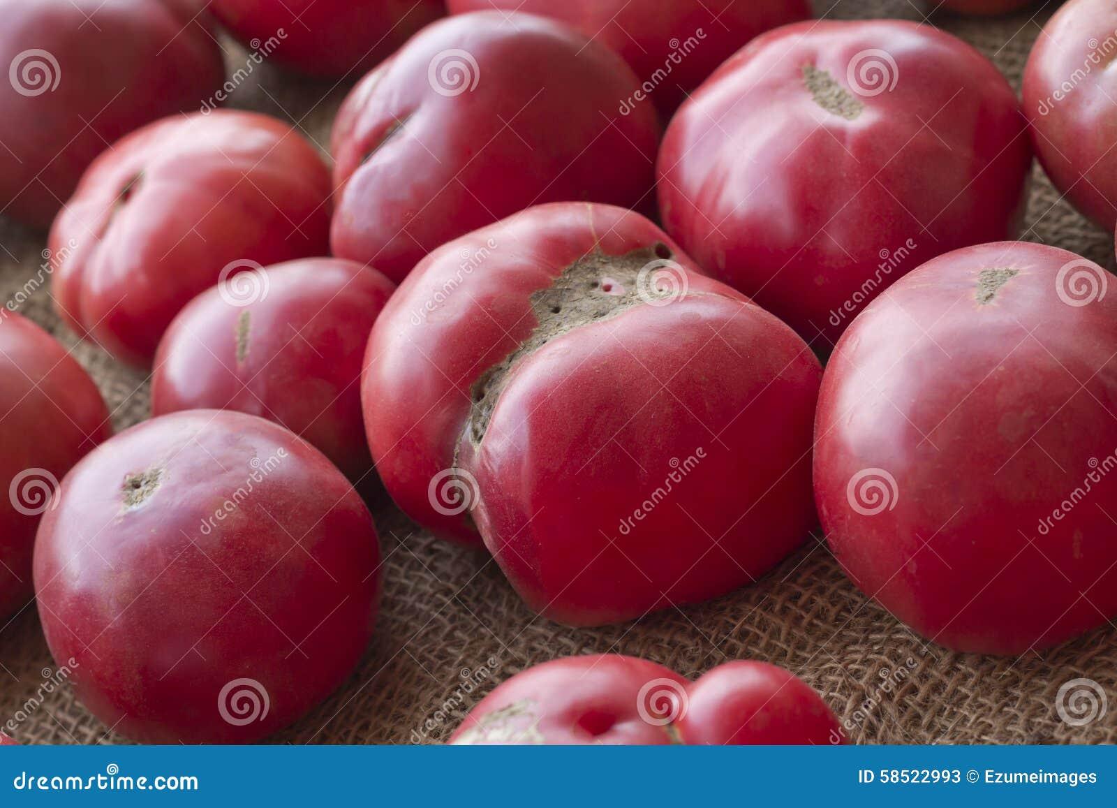 Barwi heirloom czerwonego pomidorów kolor żółty