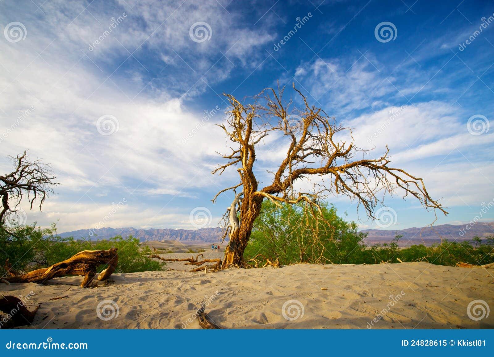 Barwiarski drzewo w Śmiertelnej dolinie