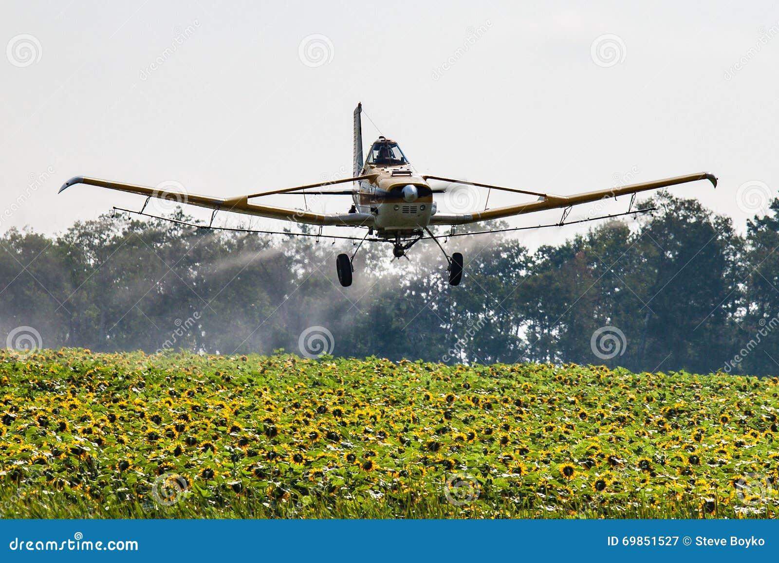 Bas avions de vol pulvérisant un champ des tournesols
