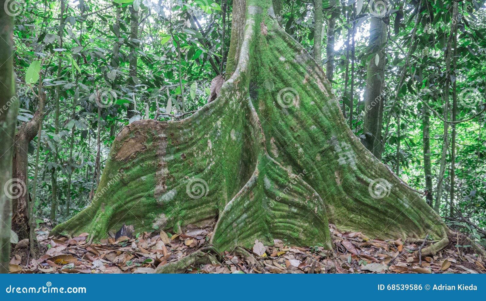 Base d arbre de Swirly