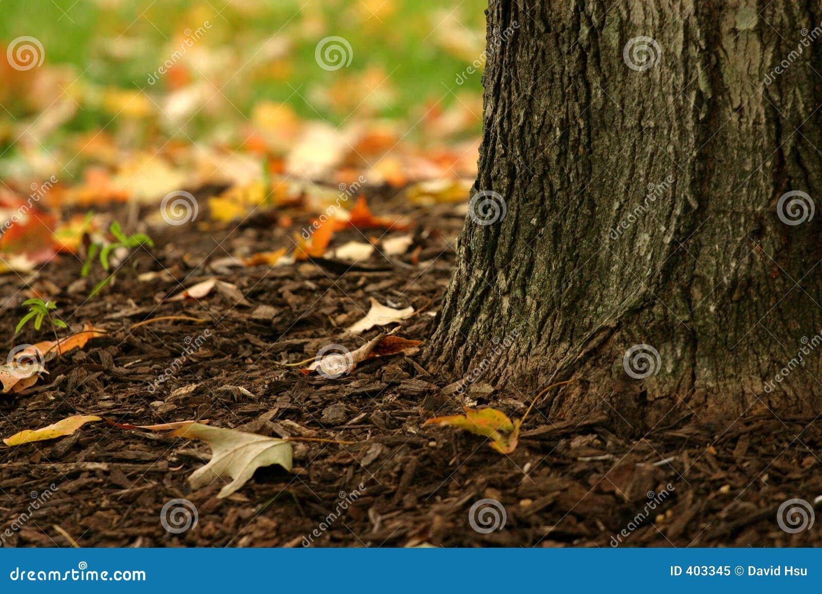 Base de uma árvore