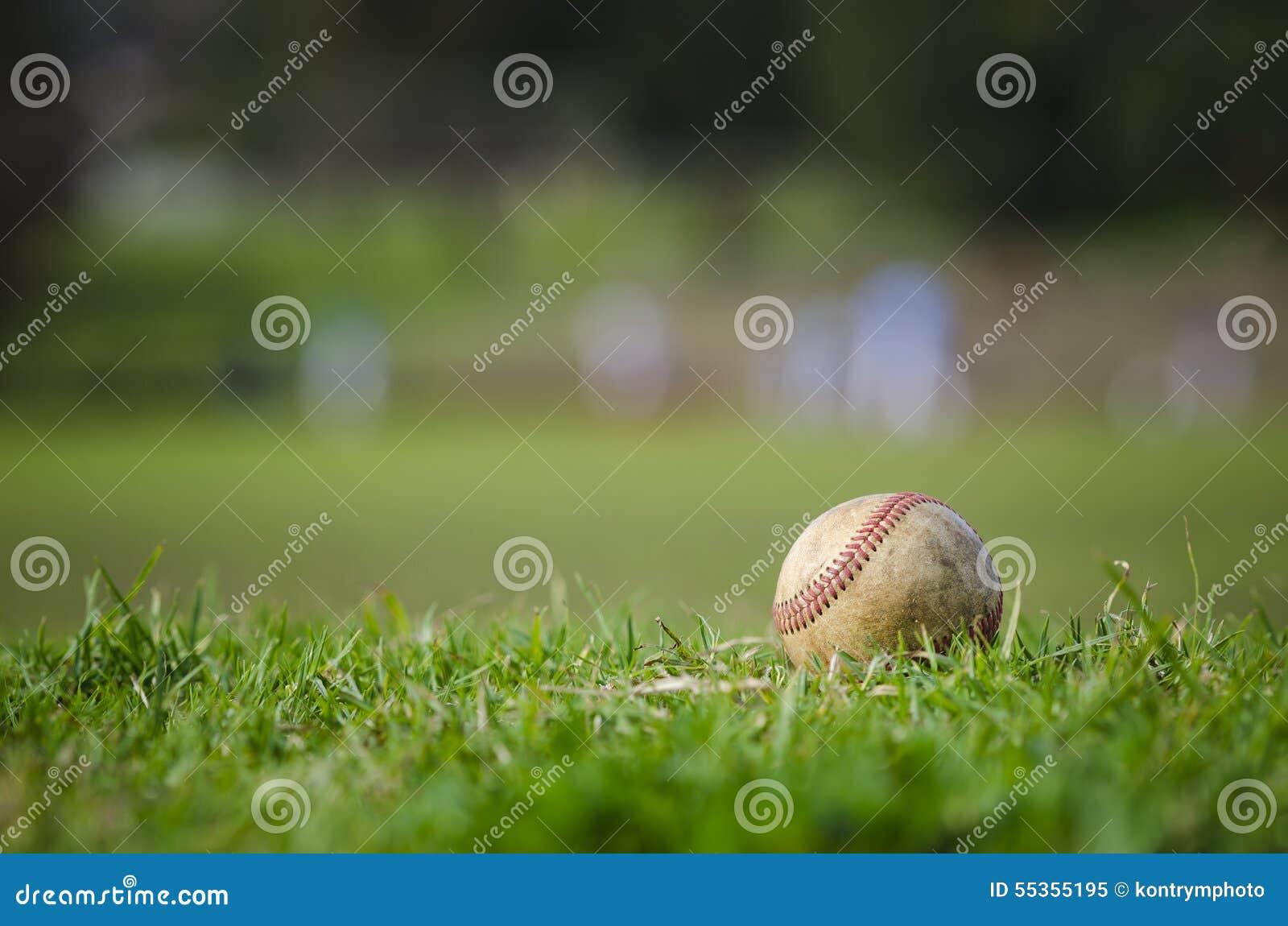 Baseball usato su erba verde fresca