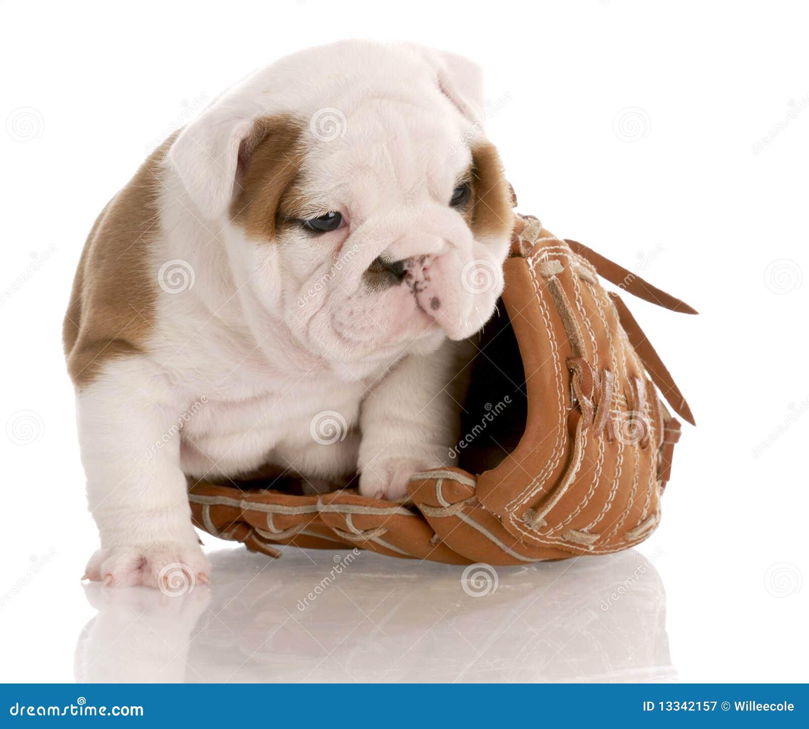 Baseballa rękawiczki szczeniak