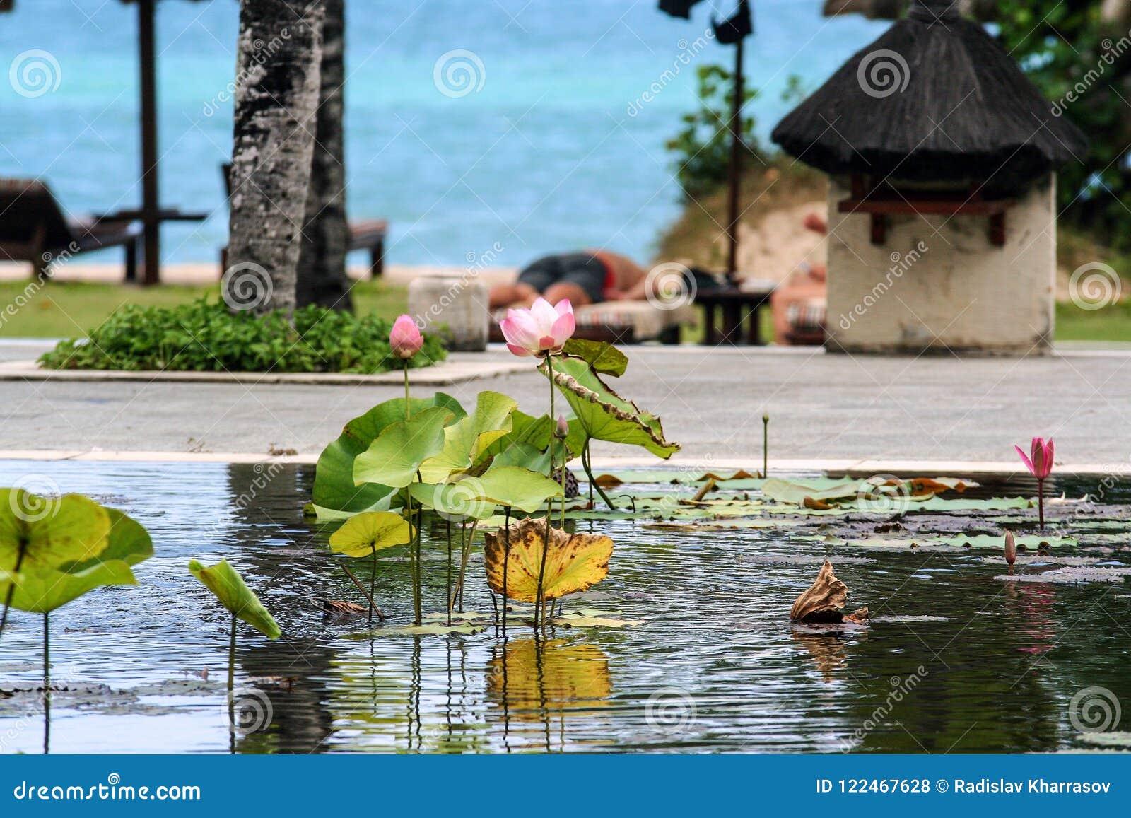 Basen z lelujami i drzewkami palmowymi wokoło mnie Seascape Indonezja
