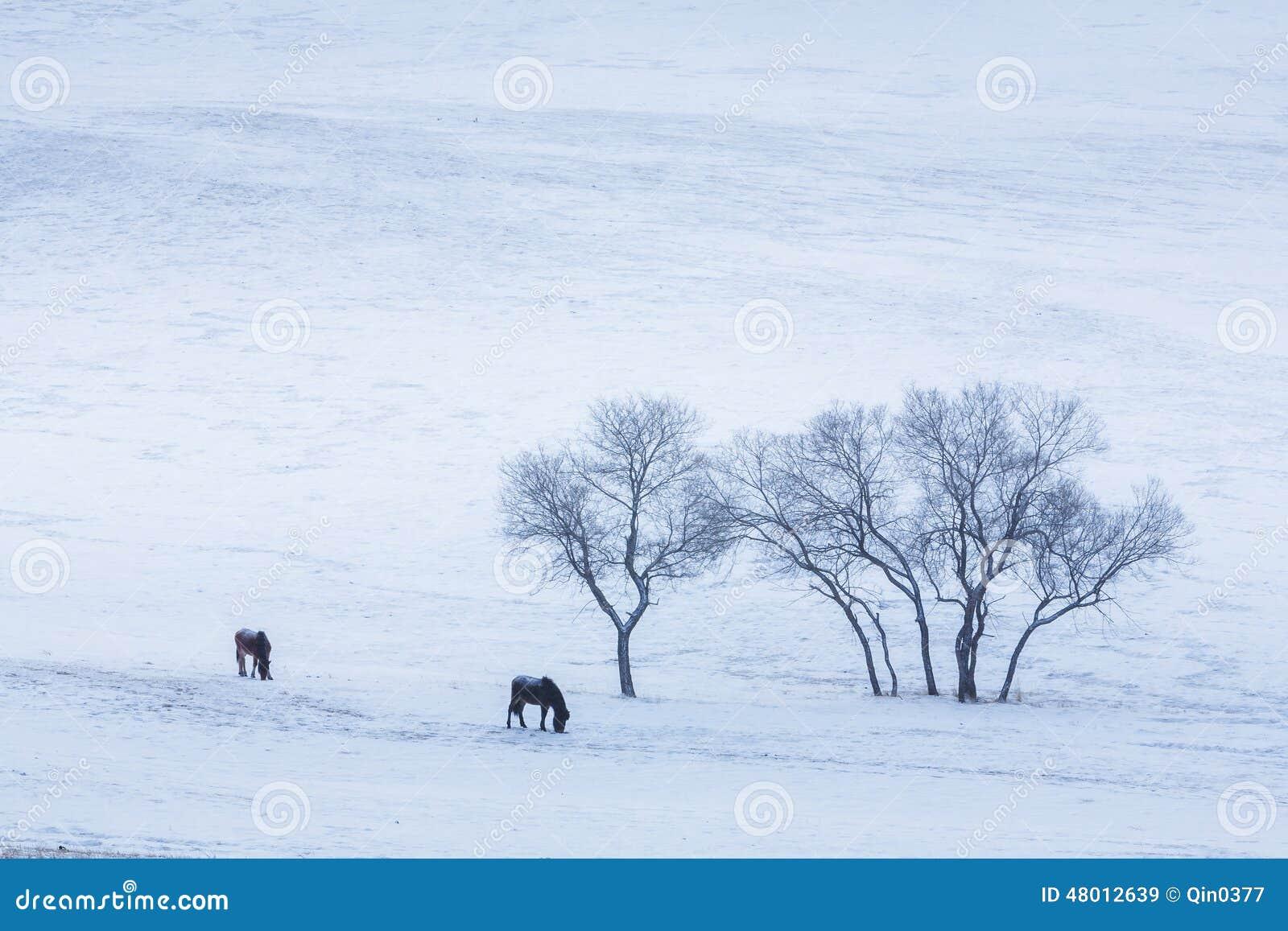 Bashang obszar trawiasty w zimie