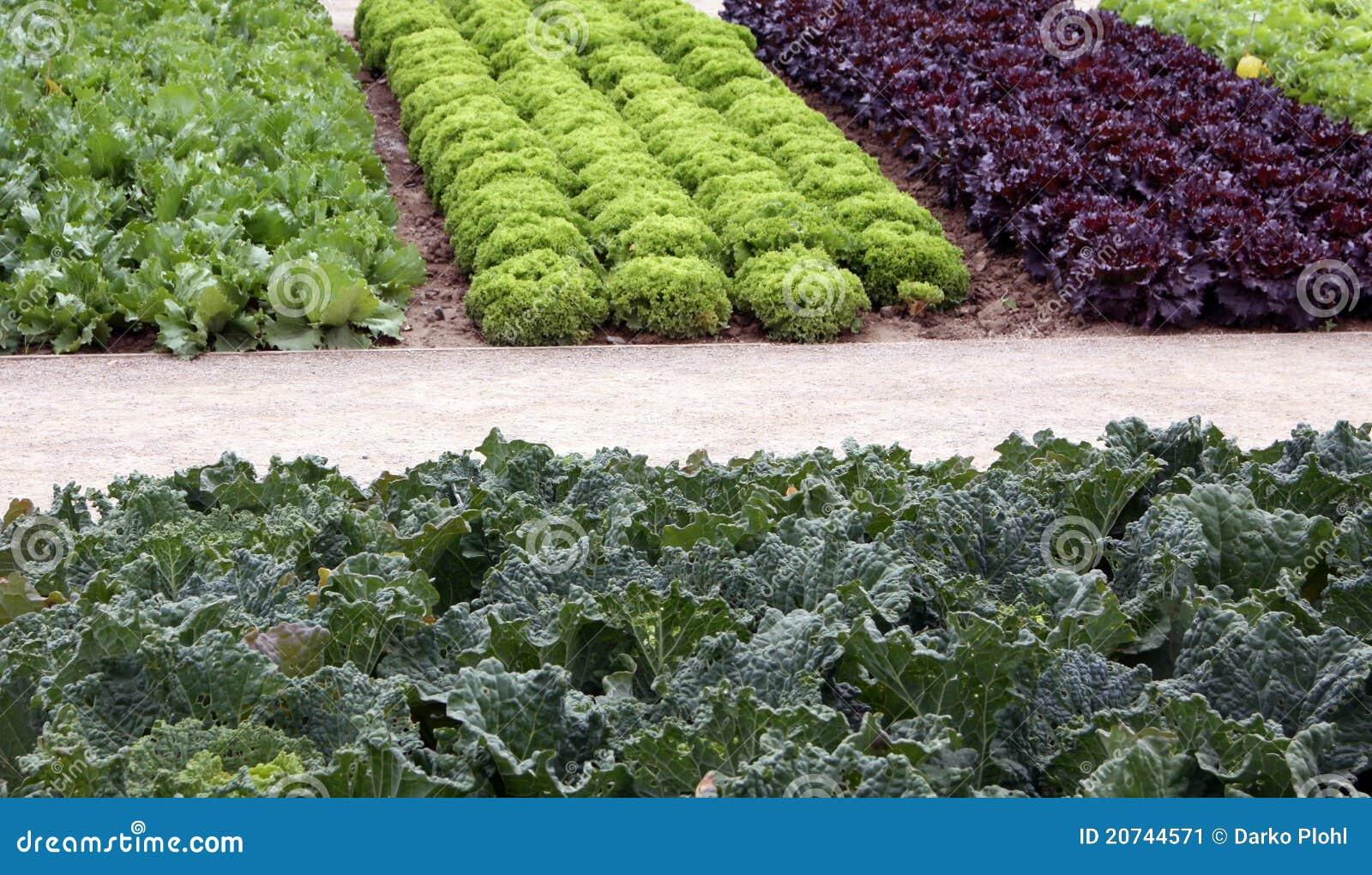 Basi dell orto con insalata e cale