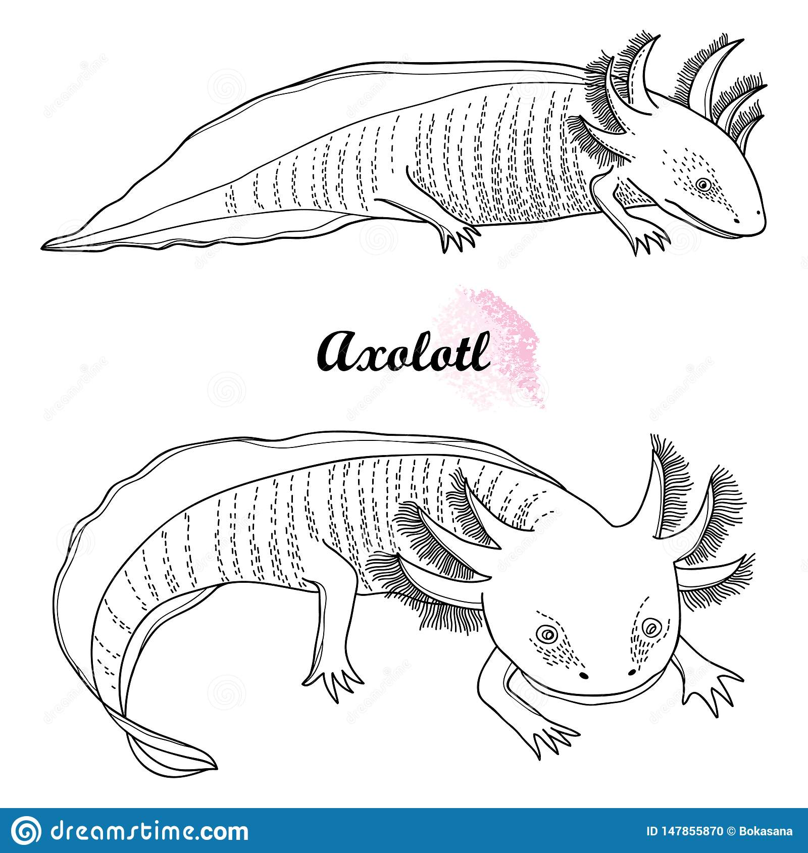 Vector set of outline Mexican axolotl or walking fish in black isolated on white background. Vertebrate animal amphibian.