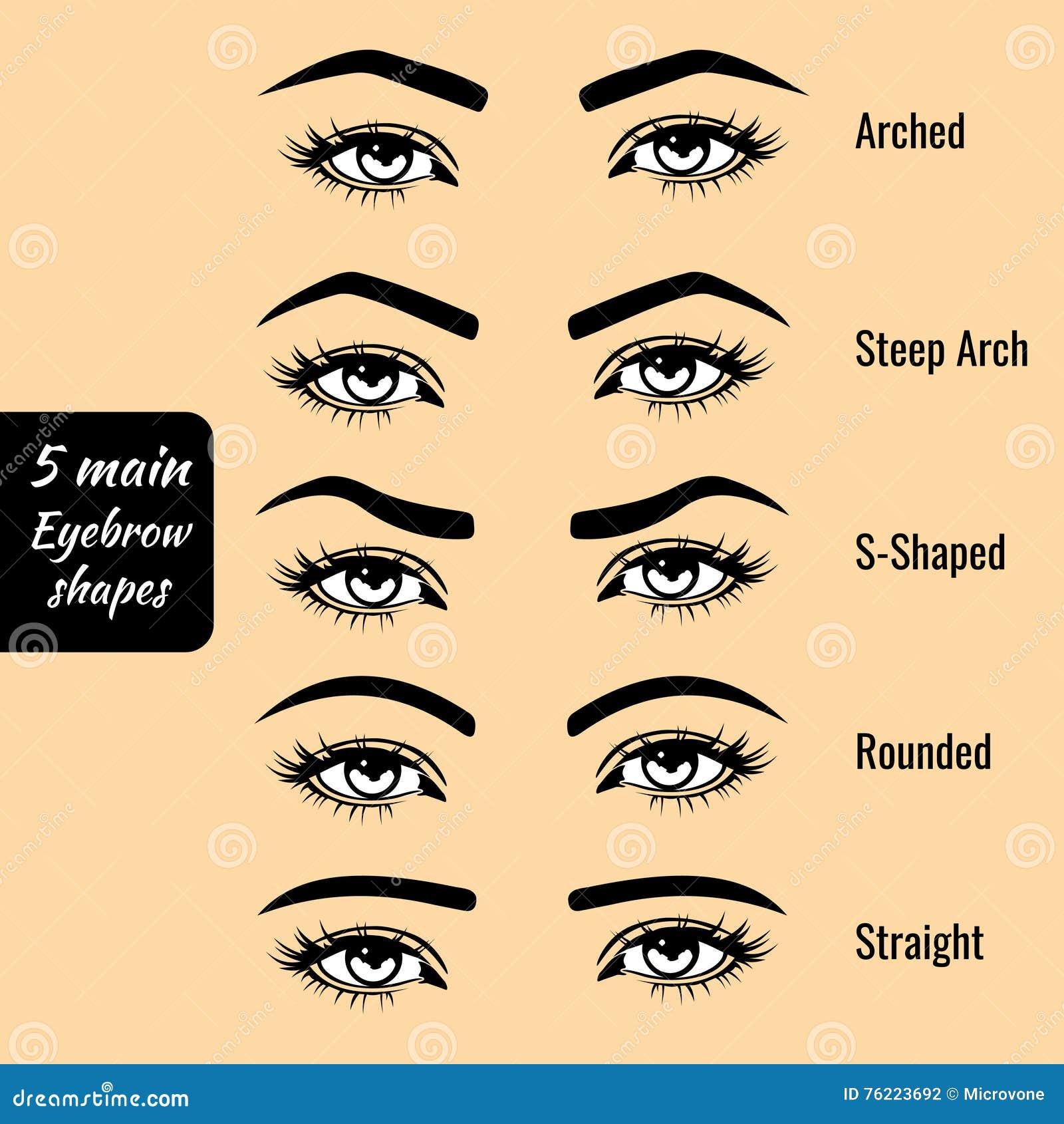 5 basic eyebrow shapes vector illustration. Black Bedroom Furniture Sets. Home Design Ideas