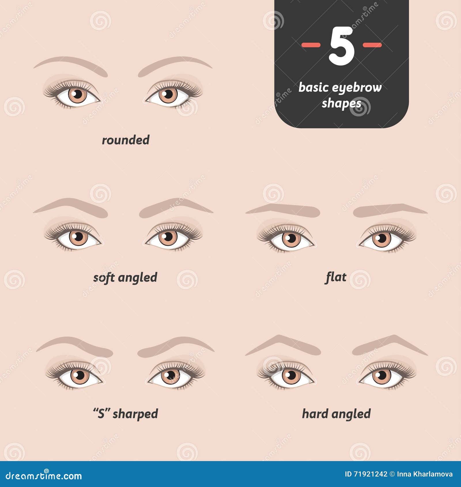 5 Basic Eyebrow Shapes Stock Vector Illustration Of Illustration