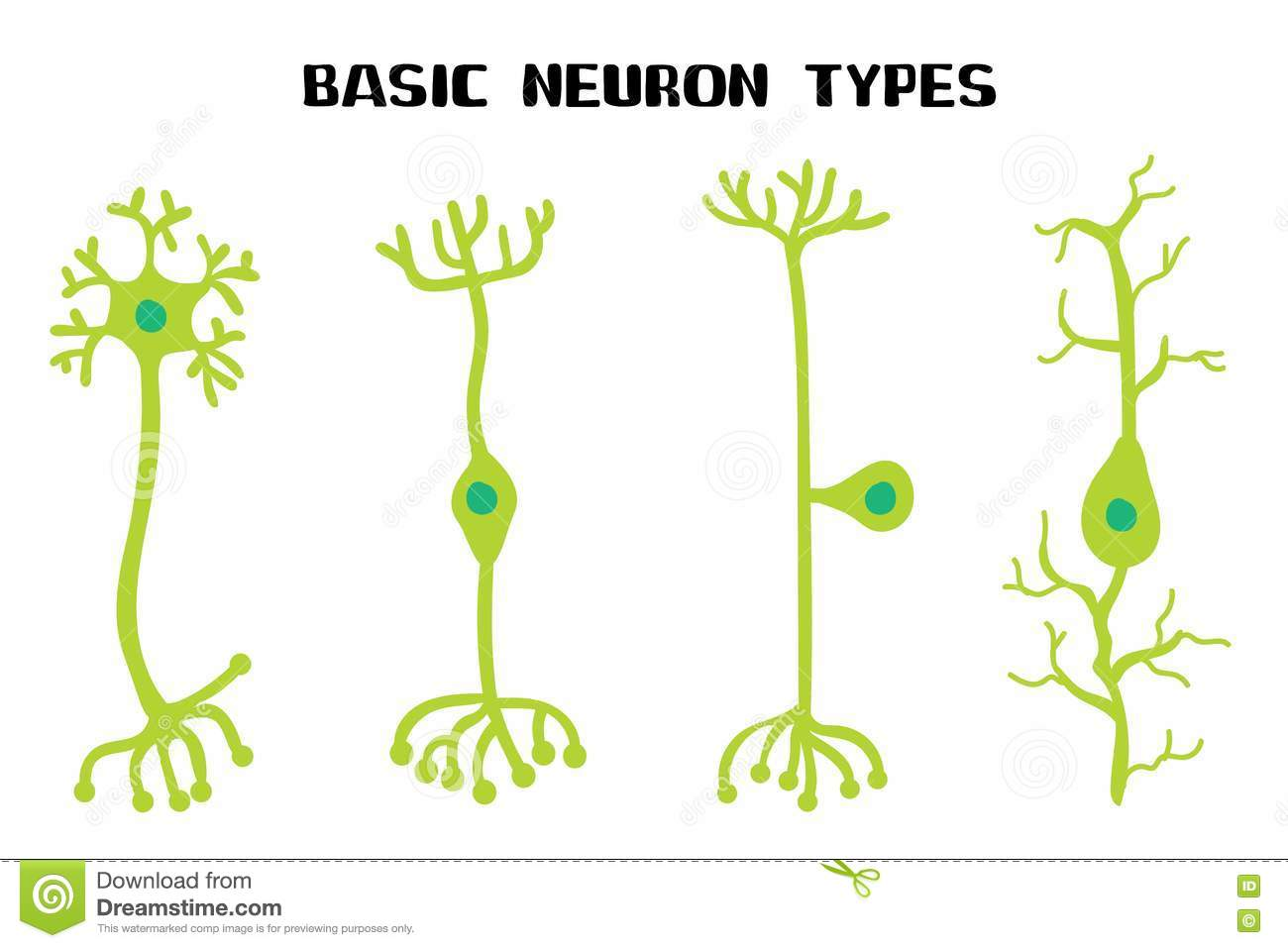 Types Of A Multipolar Neurons Stock Illustration - Image: 52114641