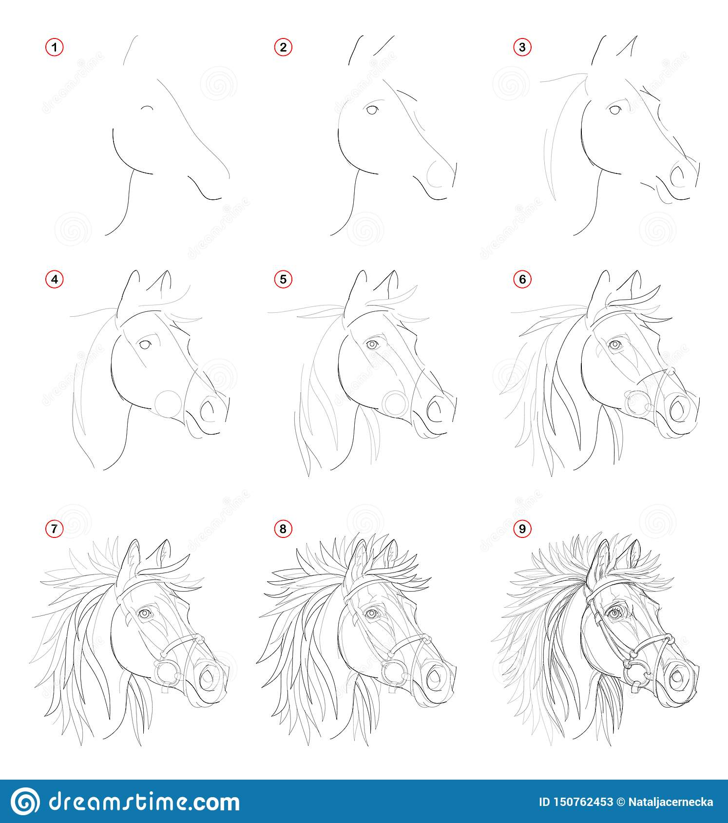 Creation Step By Step Pencil Drawing Page Shows How Learn To Draw Sketch Of Imaginary Horses Head Stock Vector Illustration Of Design Exercise 150762453