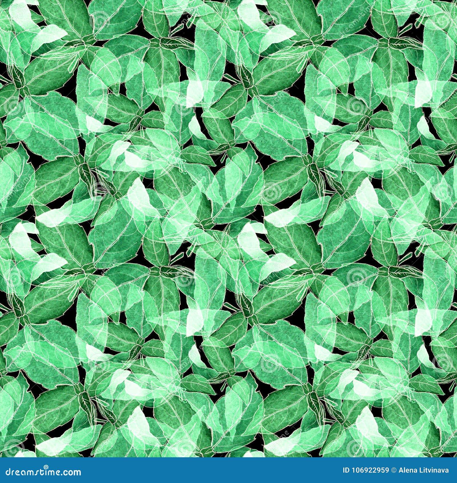 Basil Leafs Bezszwowy wzór Repeatably ręka Rysujący tło z pikantność basilem i ziele