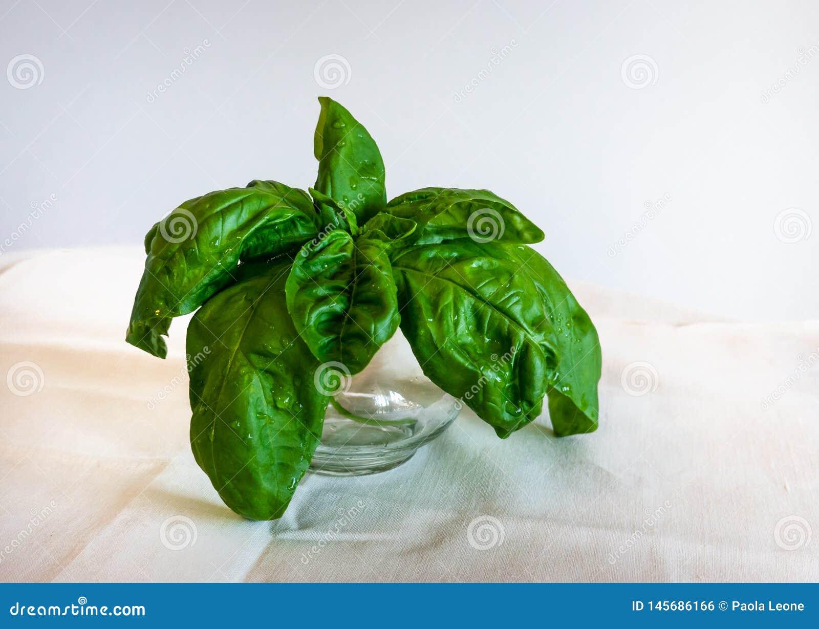 Basil Leaves en una taza de cristal en el fondo blanco Hierbas sanas para cocinar