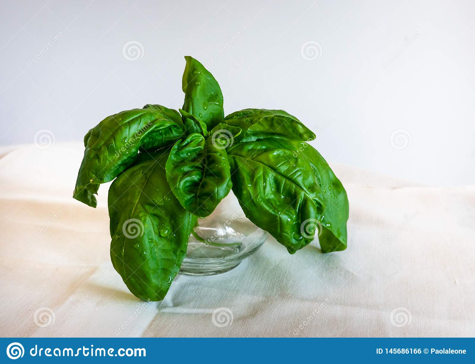 Basil Leaves in a Glass Cup on white Background. Healthy Herbs for Cooking