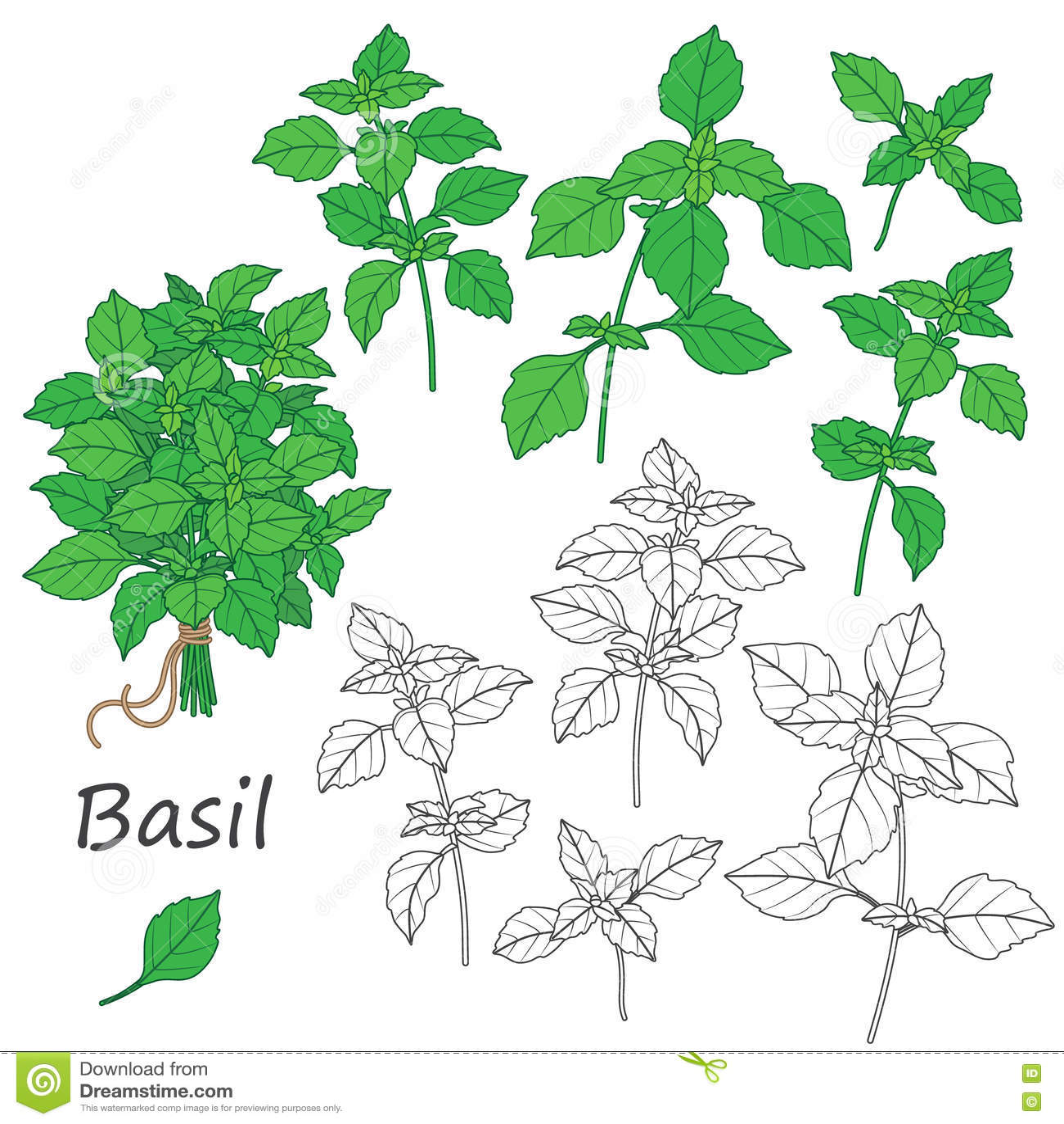 Basil Leaves Set