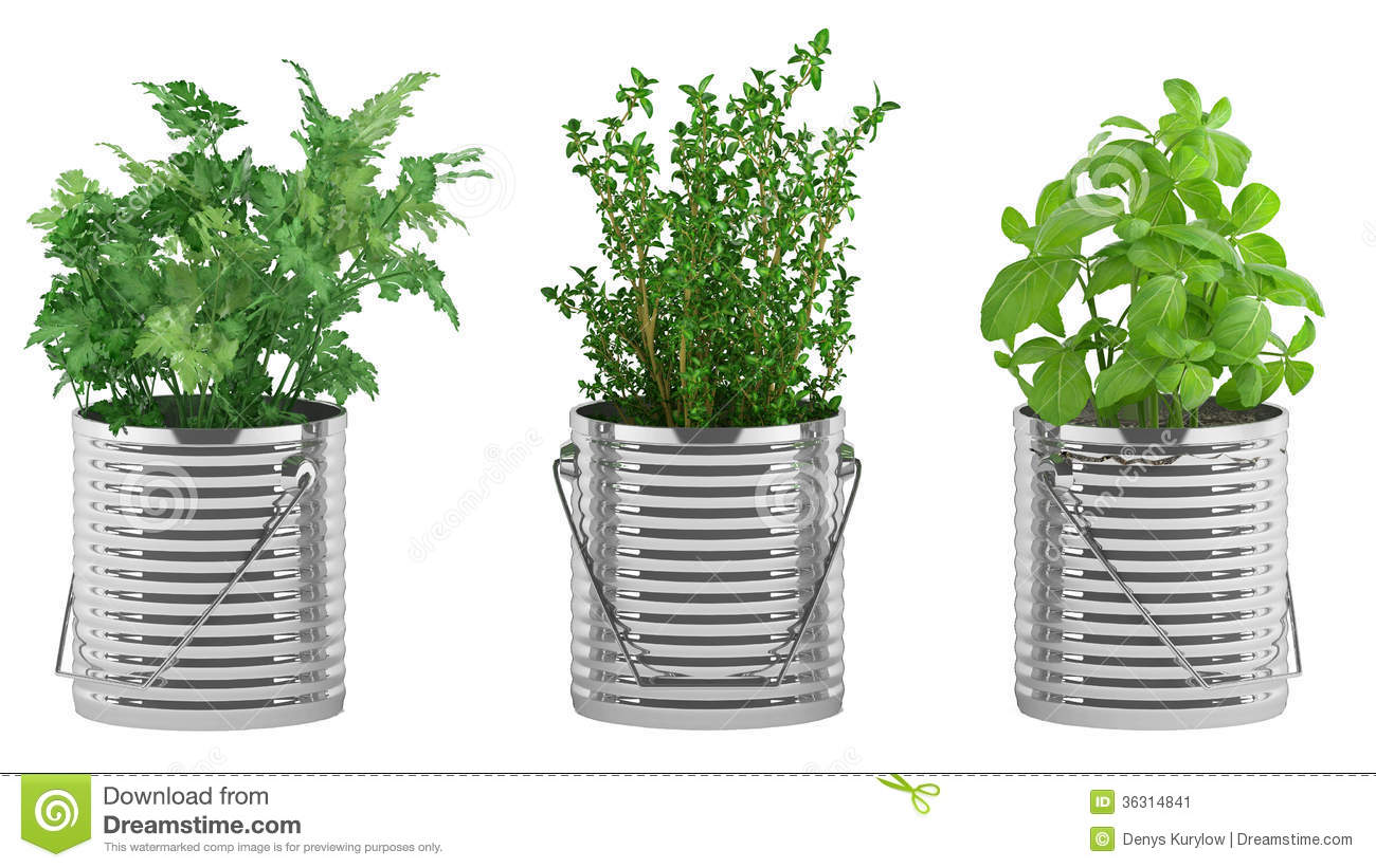 178 & Basil Thyme Parsley In The Metal Flower Pots Stock ...