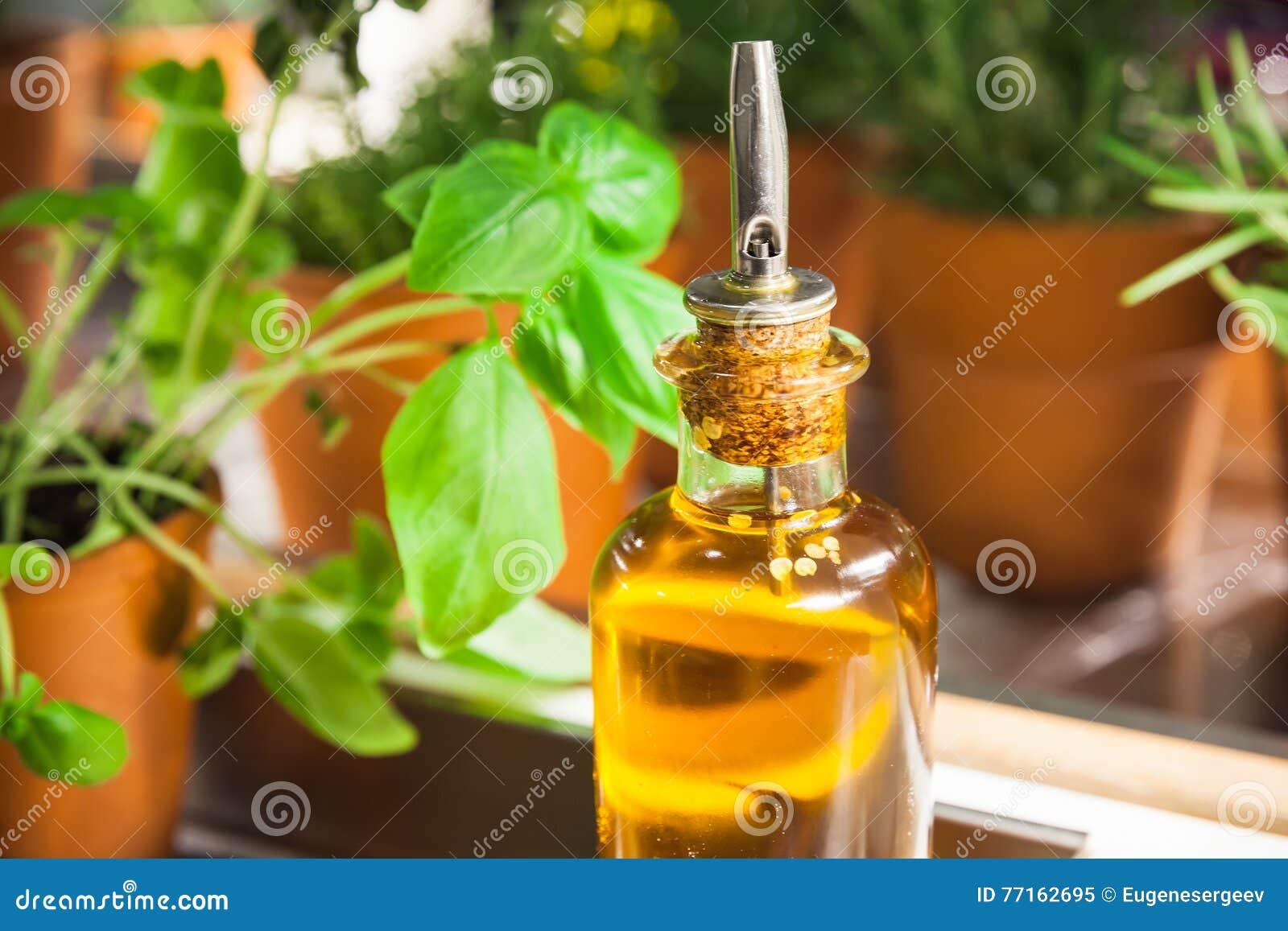 Basilic vert en pot et huile d olive dans la bouteille en verre
