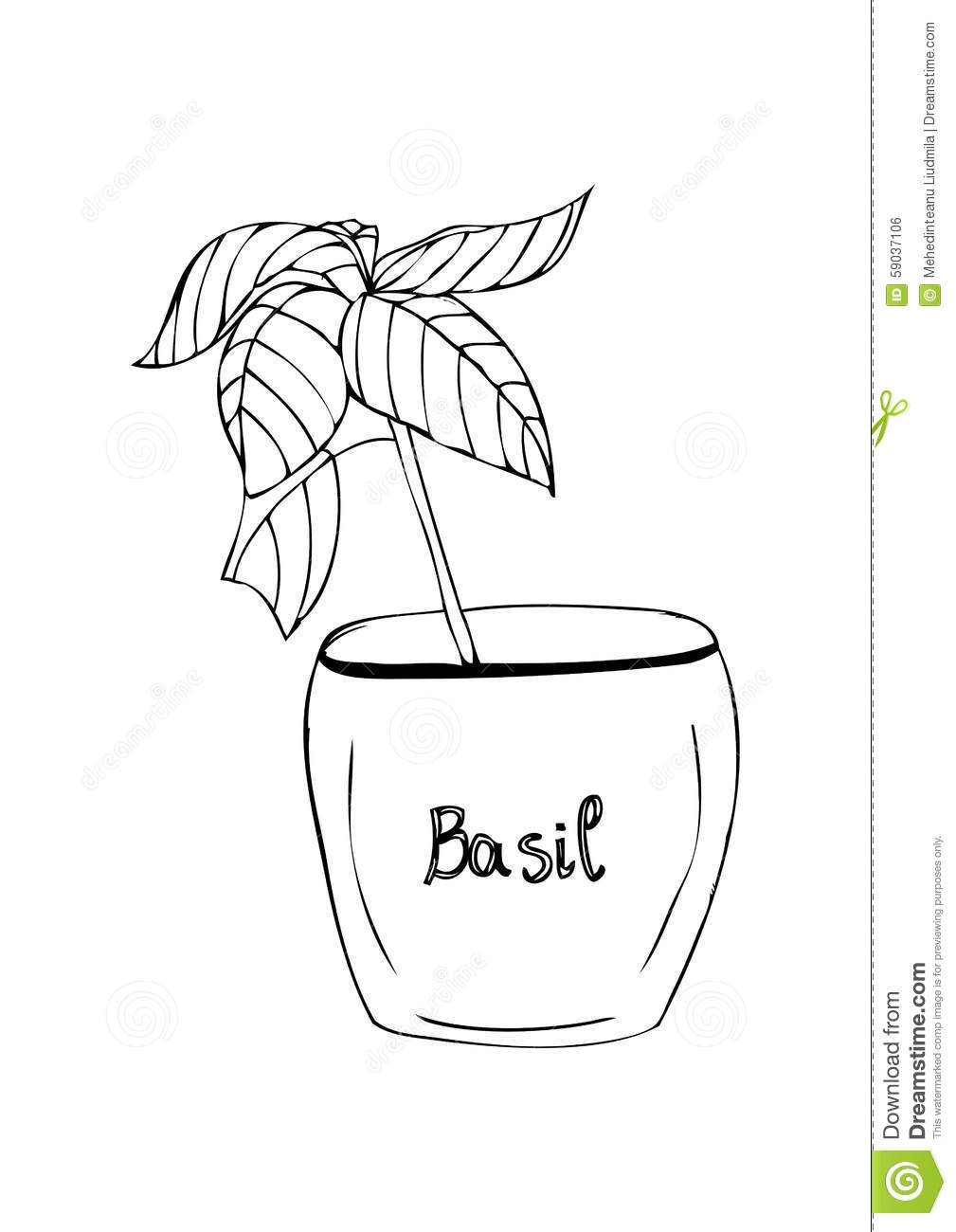Basilico in vaso su fondo bianco illustrazione di stock for Basilico in vaso