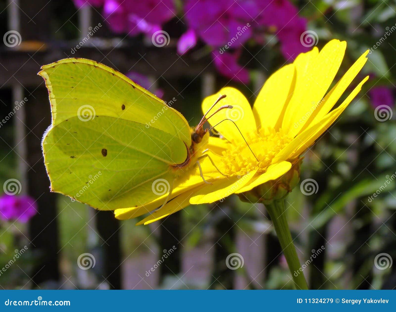 Basisrecheneinheit auf Blume
