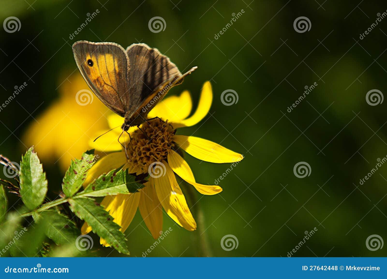 Basisrecheneinheit auf gelber Blume