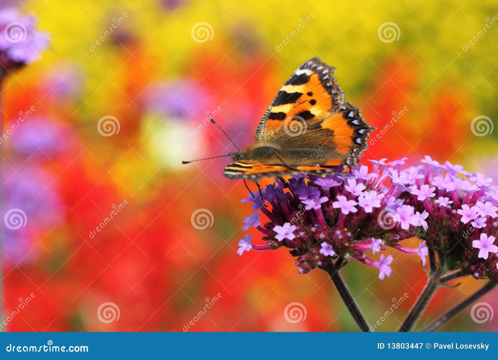 Basisrecheneinheit Urticaria im Profil, das auf Blume sitzt