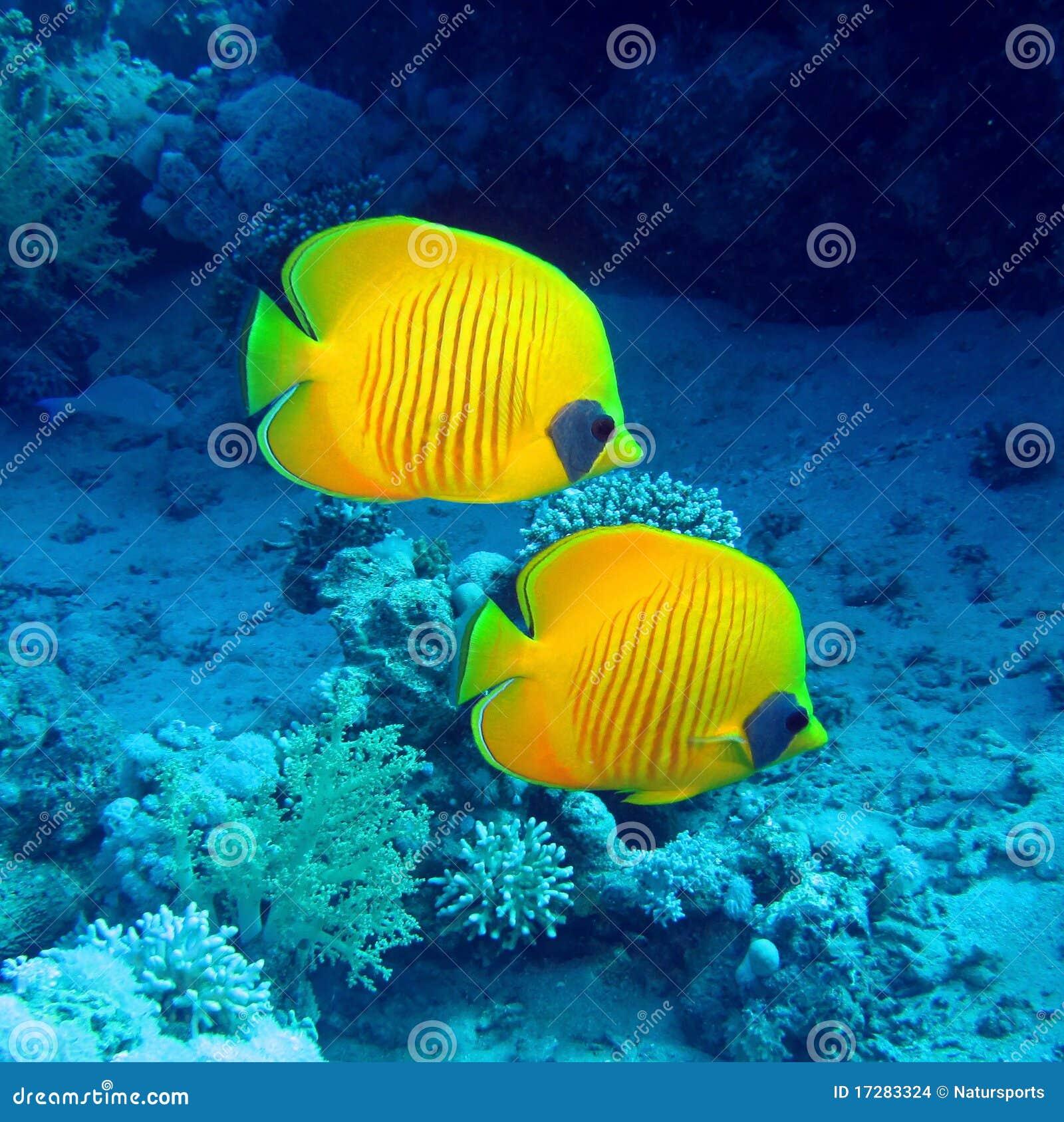 Basisrecheneinheitsfische