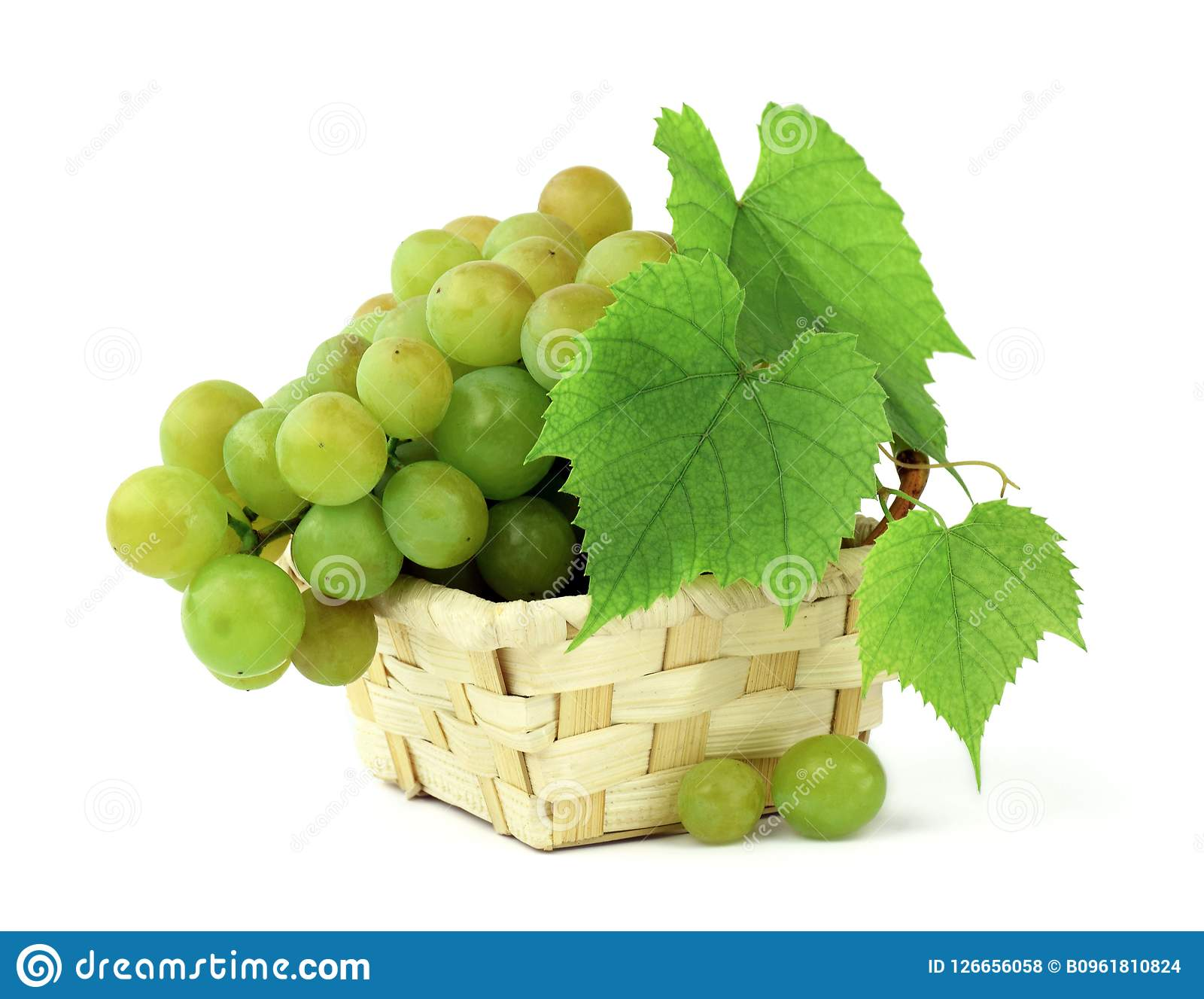 Basket of fragrant grapes isolated on white. Bunches of ripe grapes with leaves and tendrils. Autumn harvest. Close-up.
