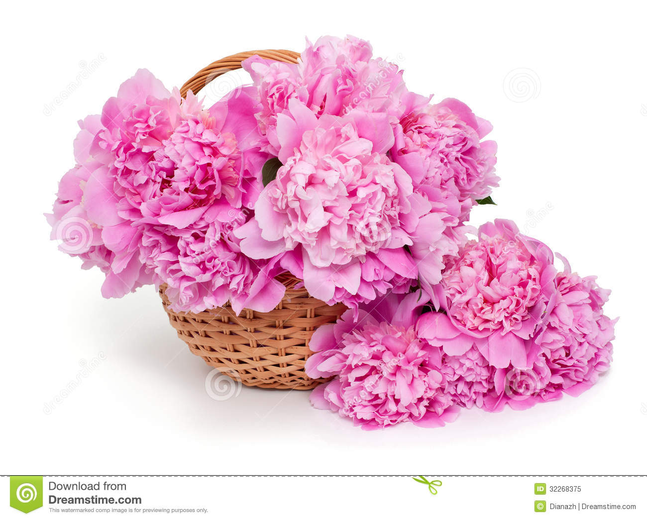 Basket Of Peonies Isolated On White Background Stock Image